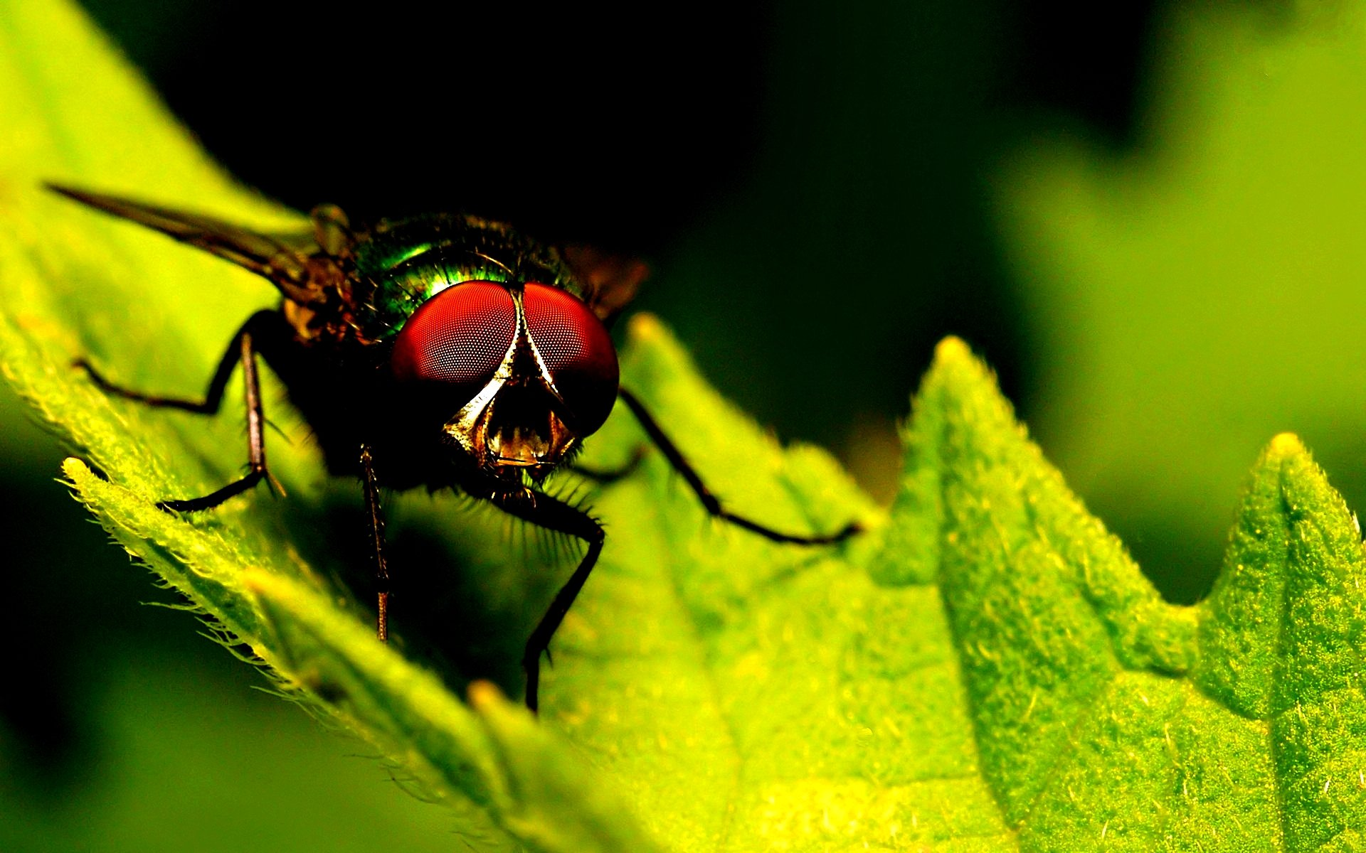 Free download Fly wallpaper ID:275215 hd 1920x1200 for PC