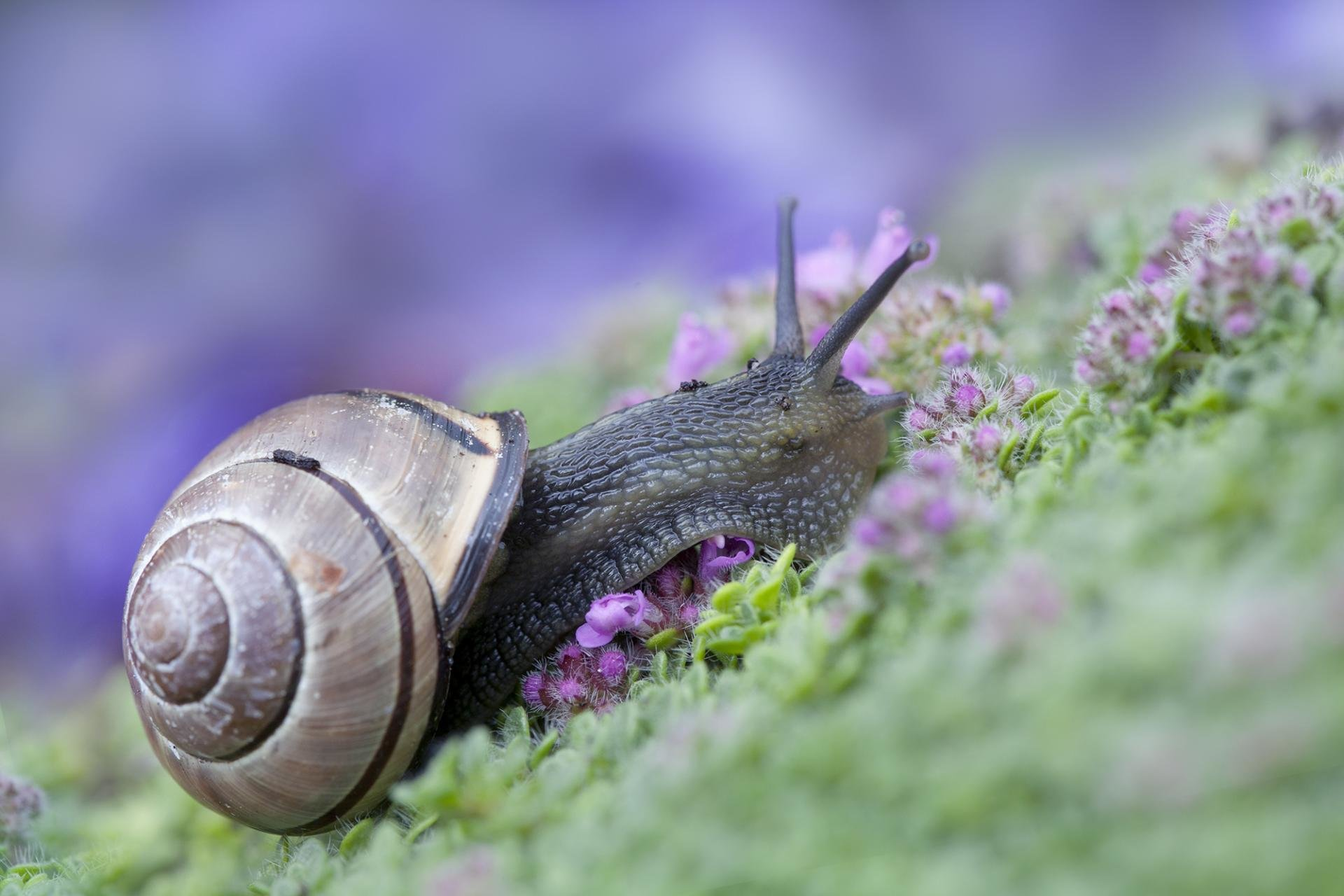 Best Snail background ID:198753 for High Resolution hd 1920x1280 desktop