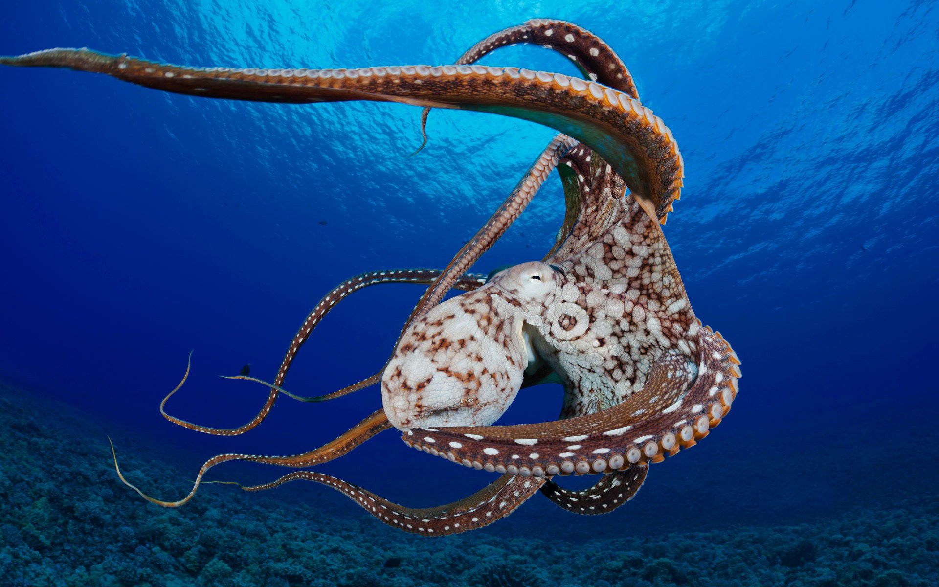 Awesome Octopus free wallpaper ID:350566 for hd 1920x1200 PC