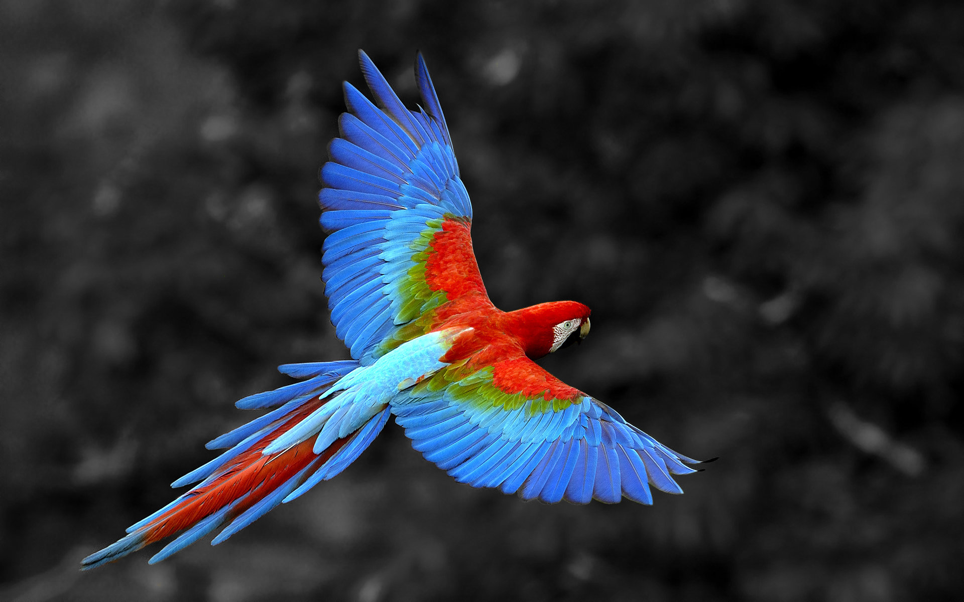 Free download Macaw wallpaper ID:46333 hd 1920x1200 for desktop