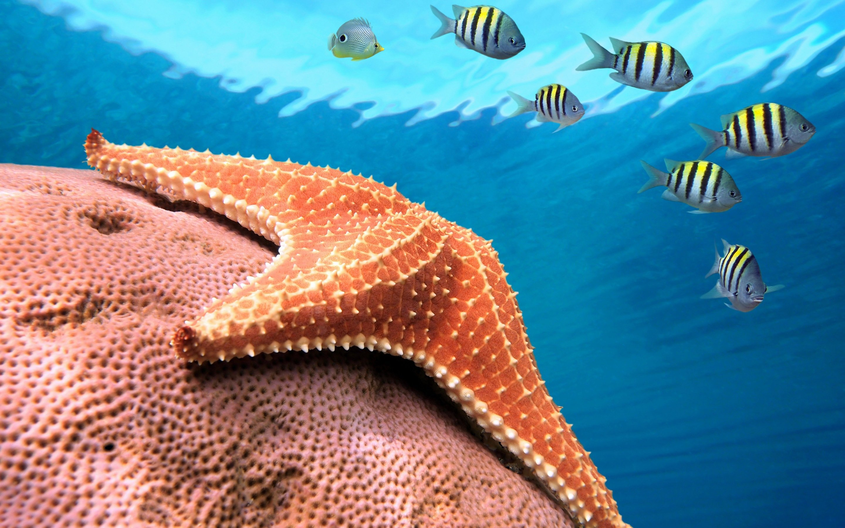 Download hd 2880x1800 Starfish computer background ID:29664 for free