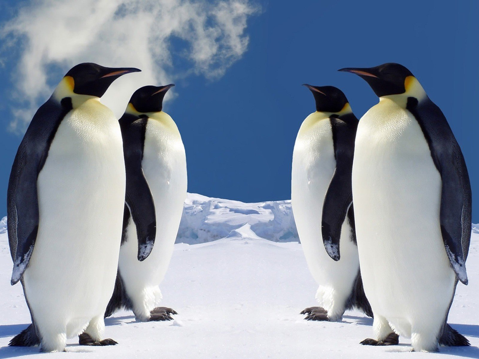 High resolution Emperor Penguin hd 1600x1200 background ID:47916 for PC