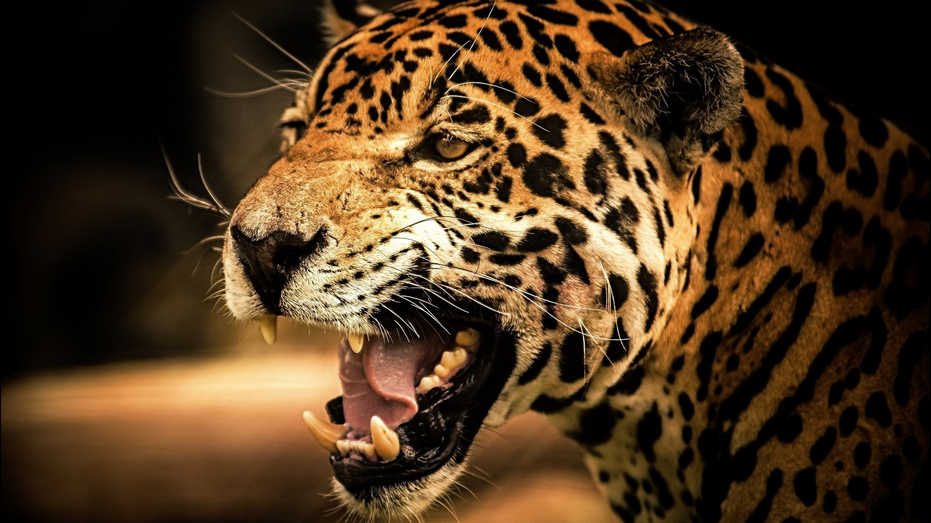 Awesome Leopard free background ID:448345 for full hd PC