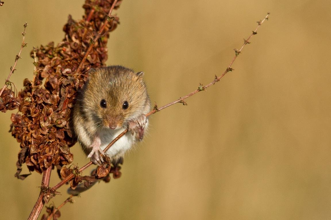 Free download Mouse background ID:132469 hd 1152x768 for desktop