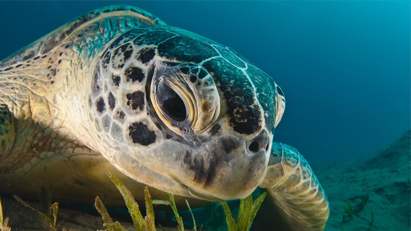 High resolution Sea Turtle hd 1600x900 background ID:150749 for desktop