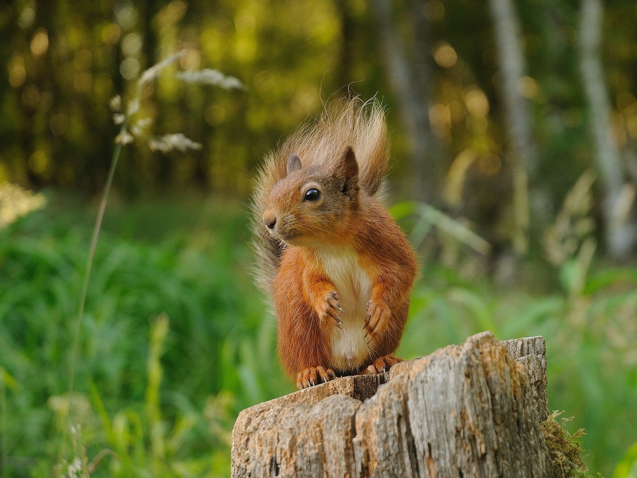 Download hd 2048x1536 Squirrel PC background ID:311476 for free