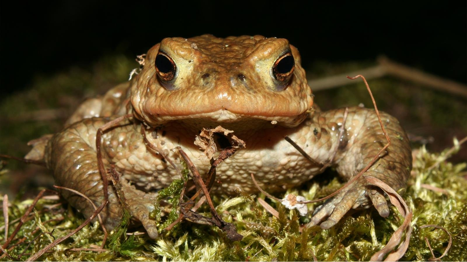 High resolution Toad hd 1600x900 background ID:58511 for PC