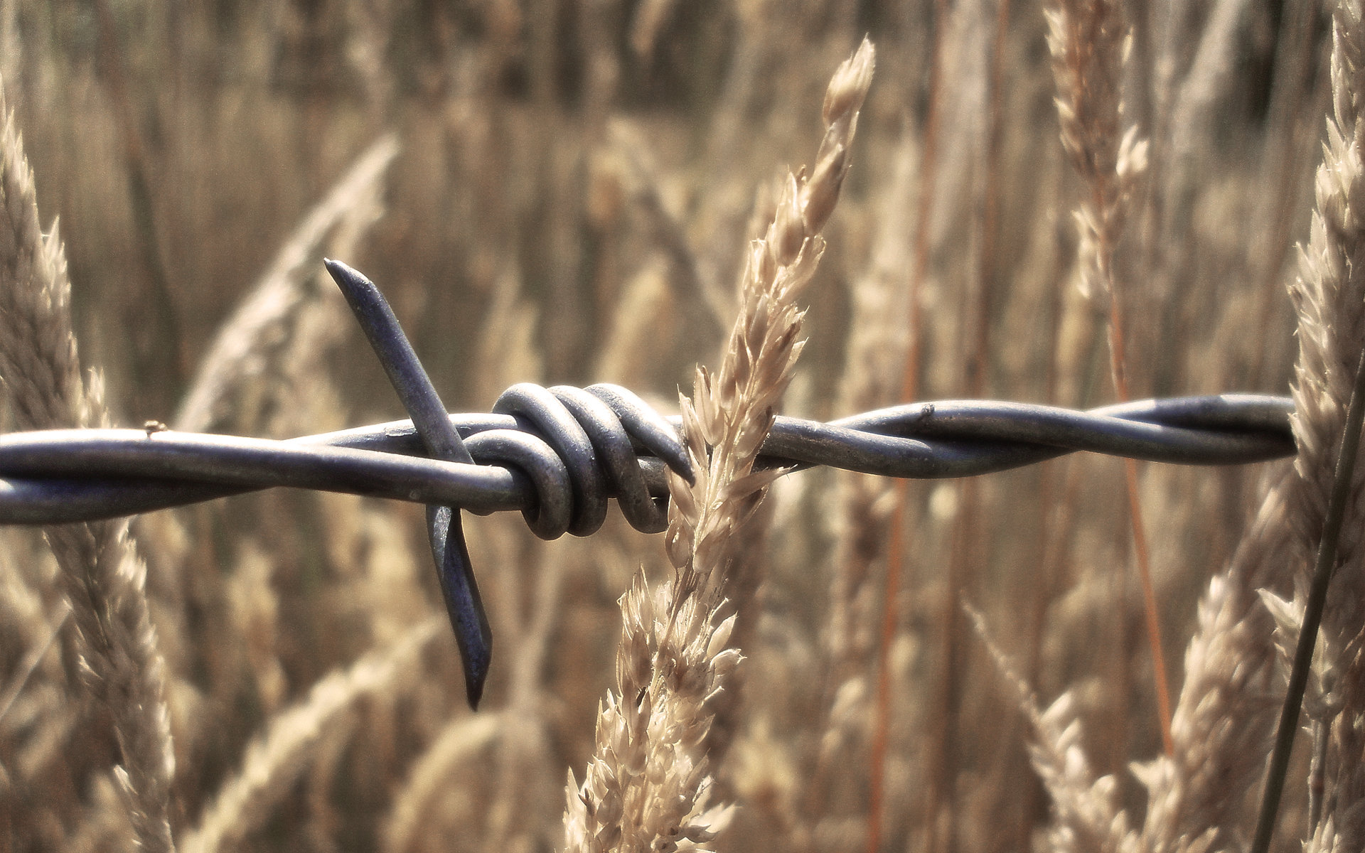 High resolution Barb Wire hd 1920x1200 wallpaper ID:259596 for desktop