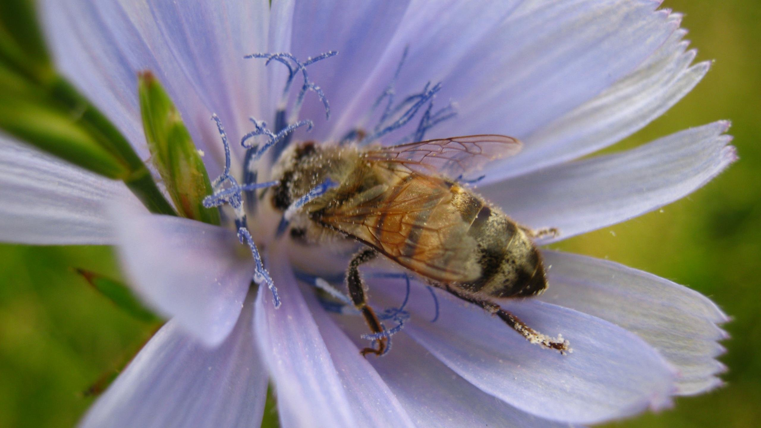 Free Bee high quality wallpaper ID:460890 for hd 2560x1440 PC