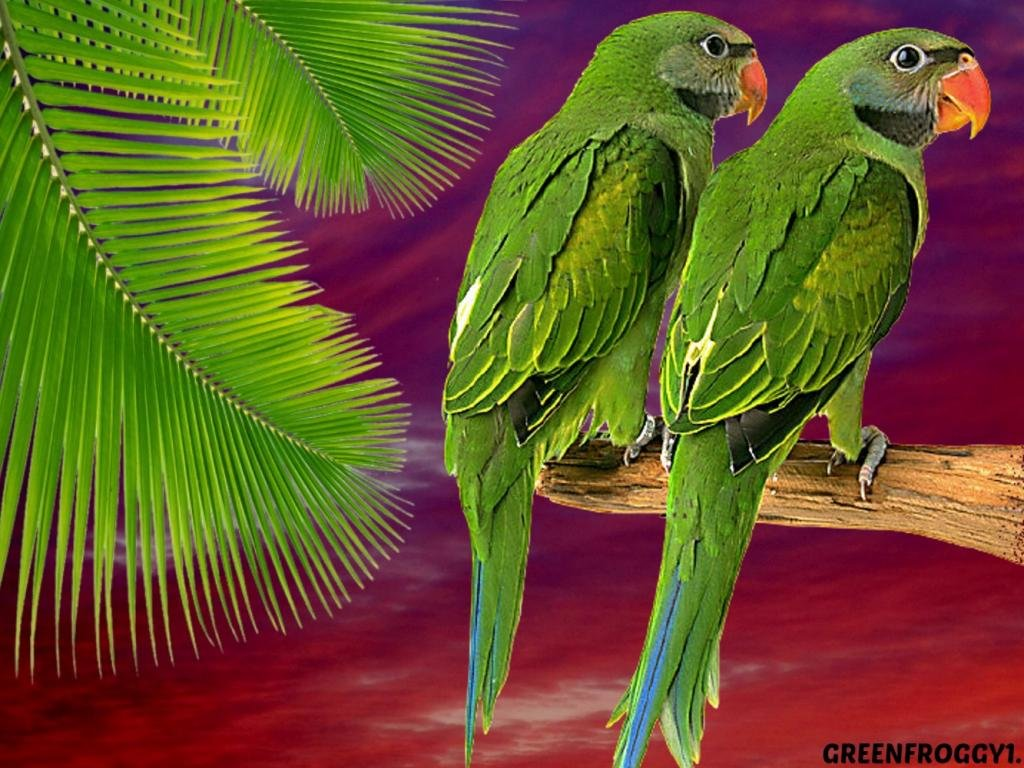 Free Parrot high quality background ID:25724 for hd 1024x768 computer