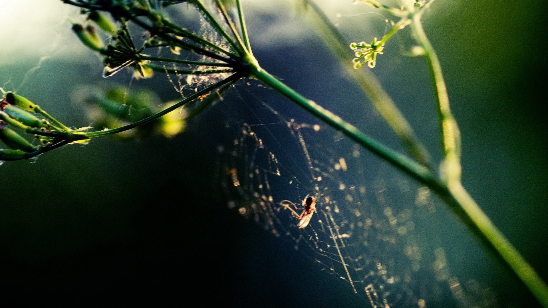 High resolution Spider Web full hd wallpaper ID:184736 for desktop