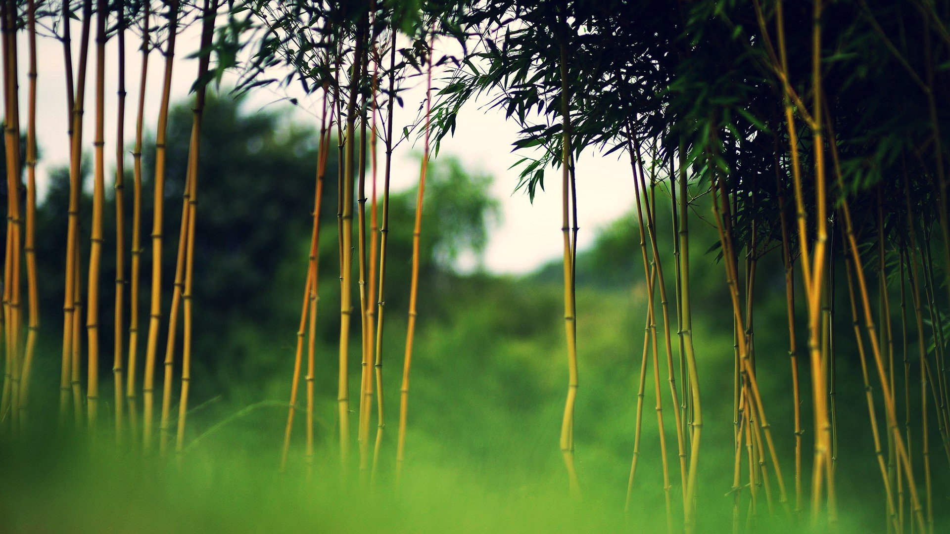 Awesome Bamboo free background ID:246807 for hd 1920x1080 desktop