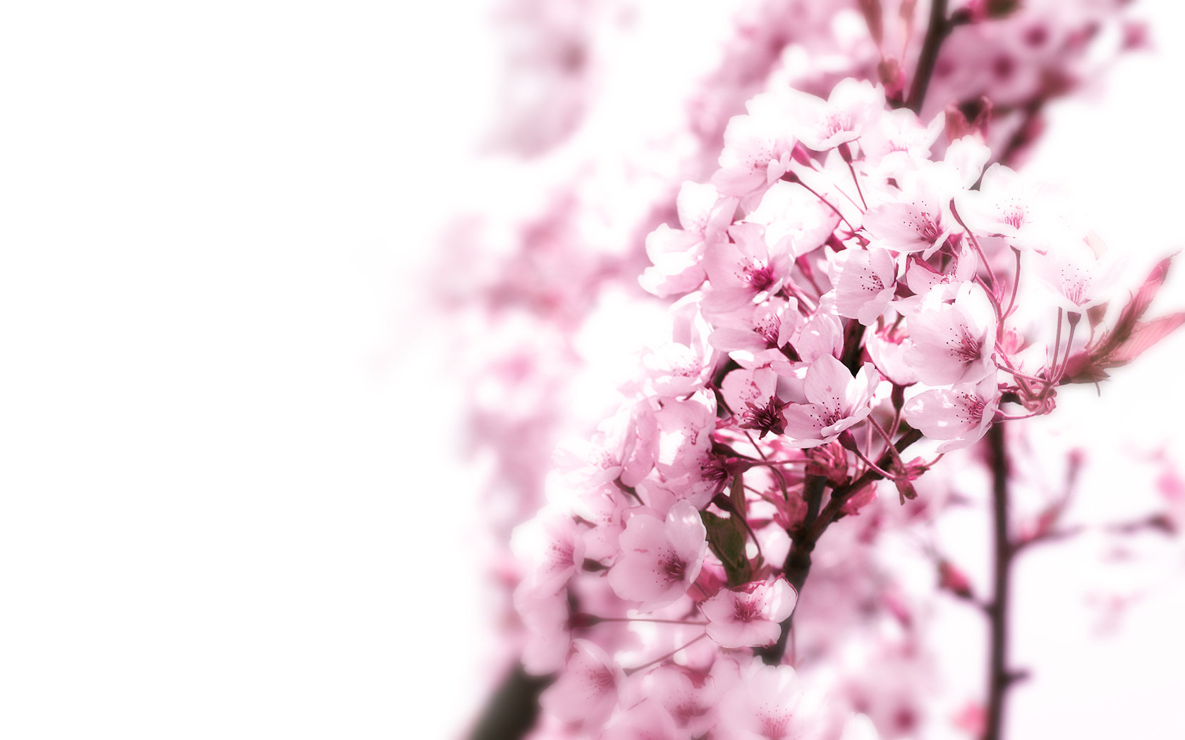 Free download Blossom background ID:332612 hd 1680x1050 for PC