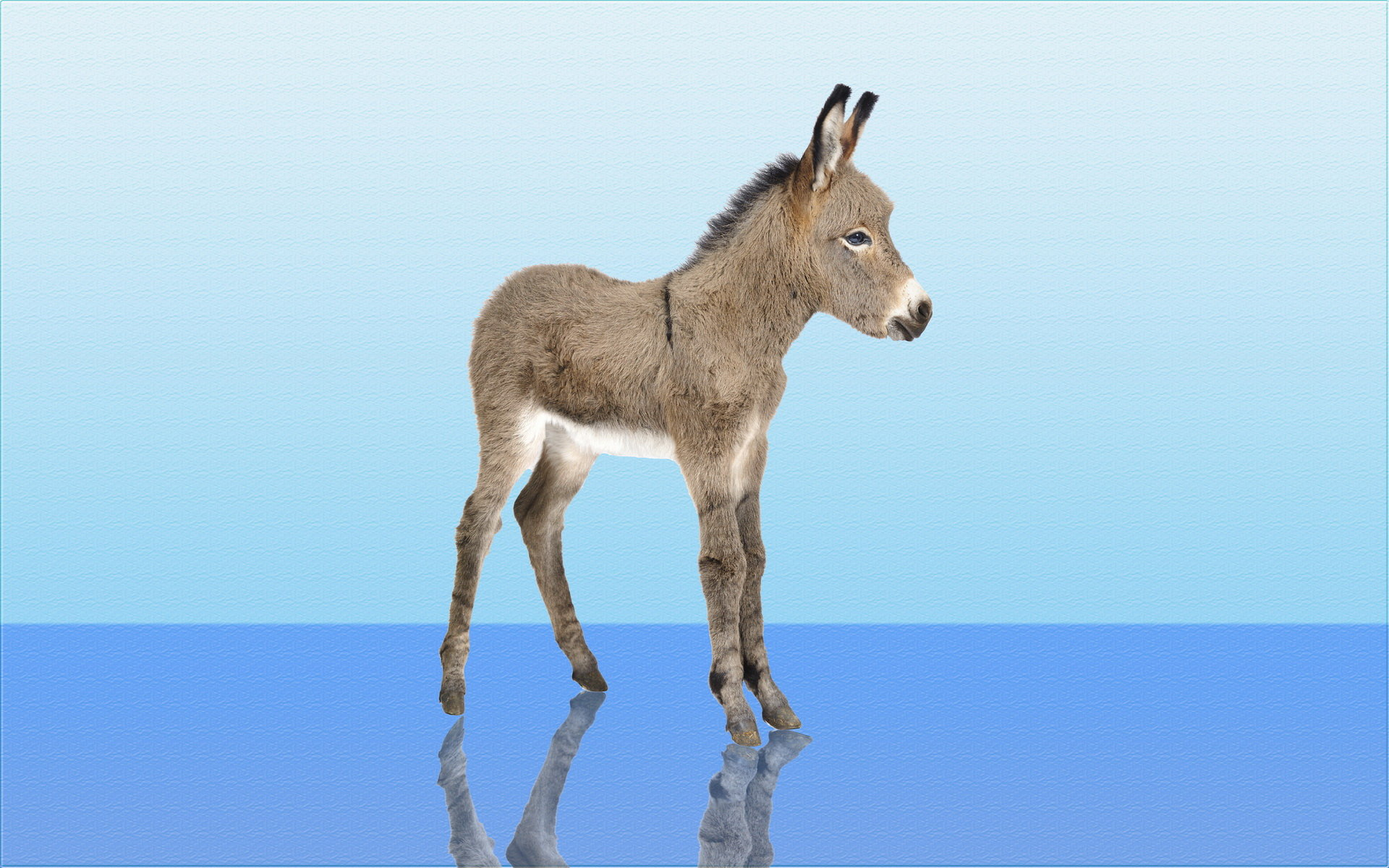 Free Donkey high quality background ID:194066 for hd 1920x1200 computer