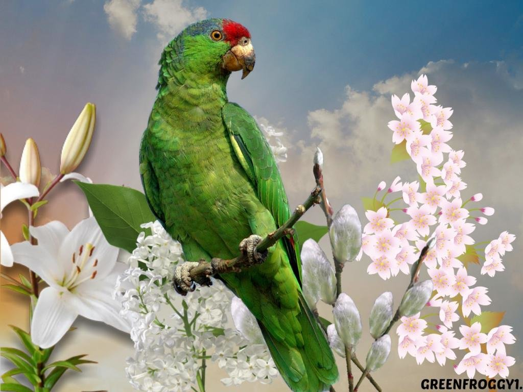 Awesome Parrot free background ID:25764 for hd 1024x768 computer