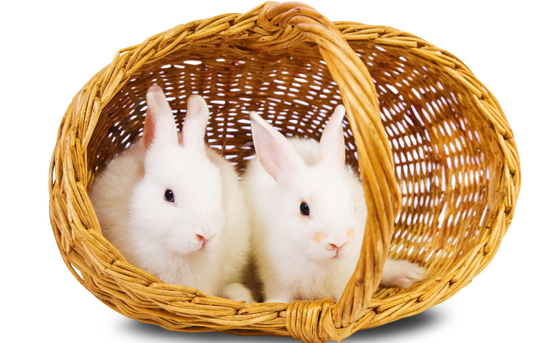 High resolution Rabbit & Bunny hd 1920x1200 background ID:248989 for desktop