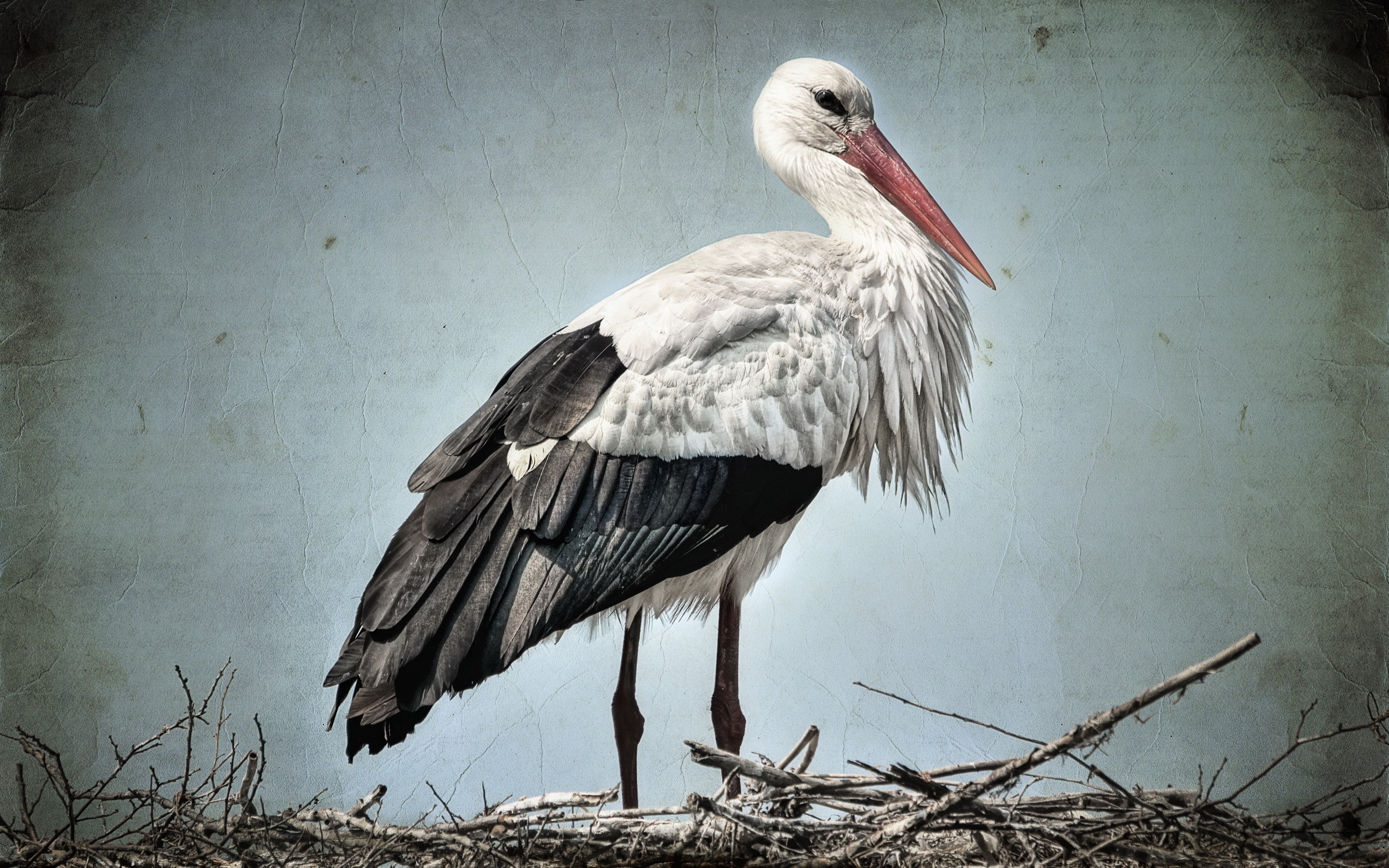 Free White Stork high quality wallpaper ID:9567 for hd 2560x1600 computer
