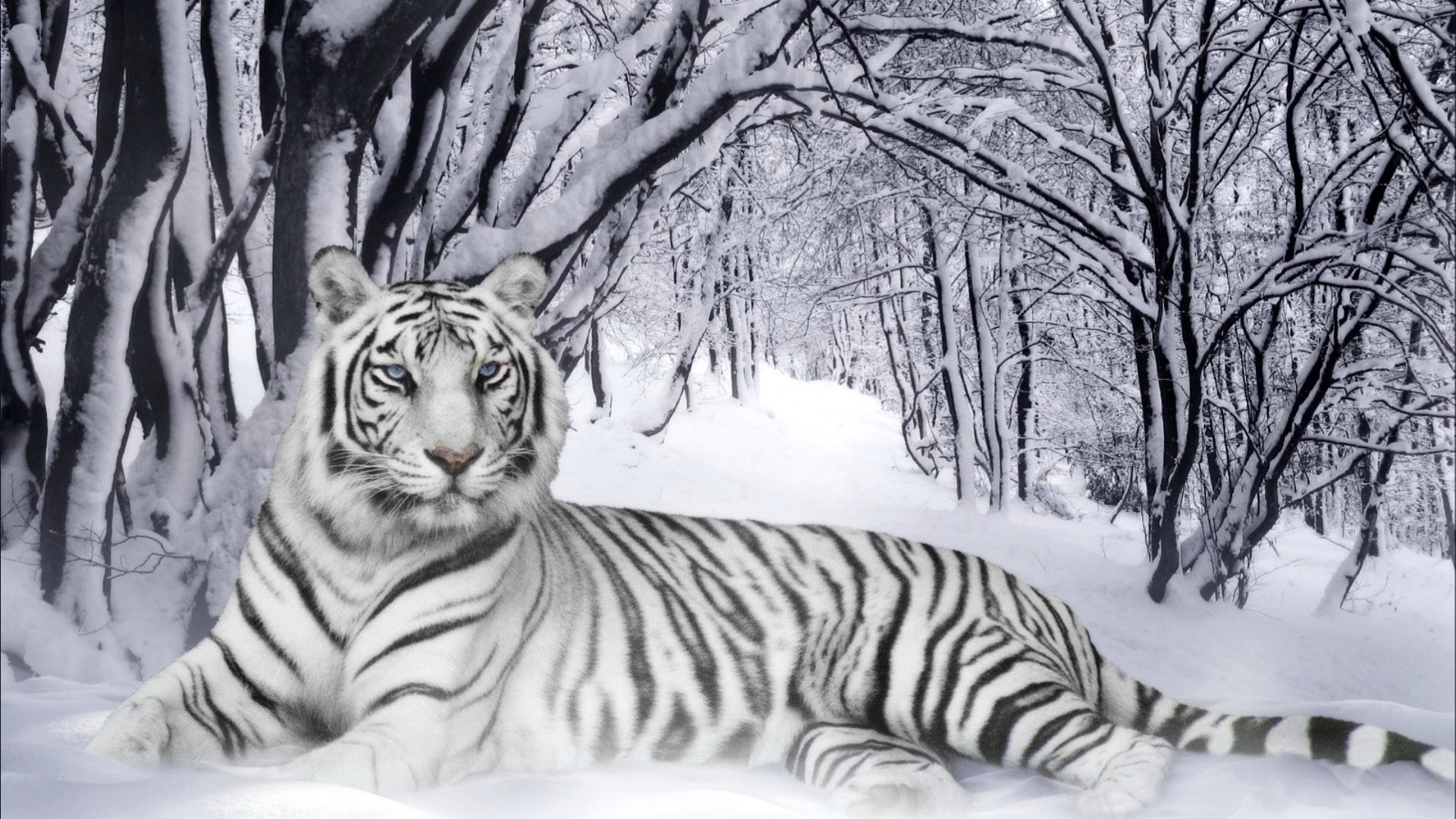Awesome White Tiger free wallpaper ID:174838 for hd 1080p desktop