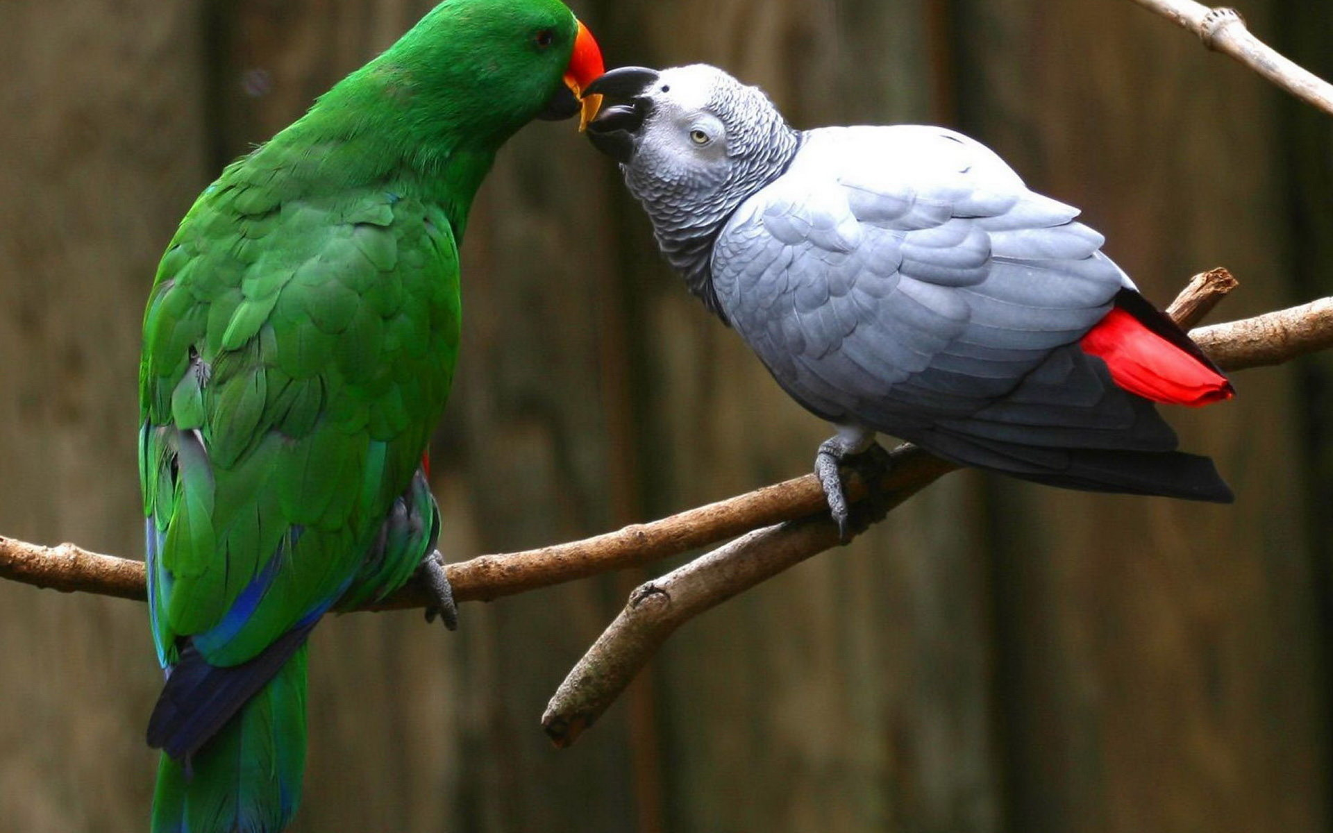 Download hd 1920x1200 Parrot PC wallpaper ID:25762 for free