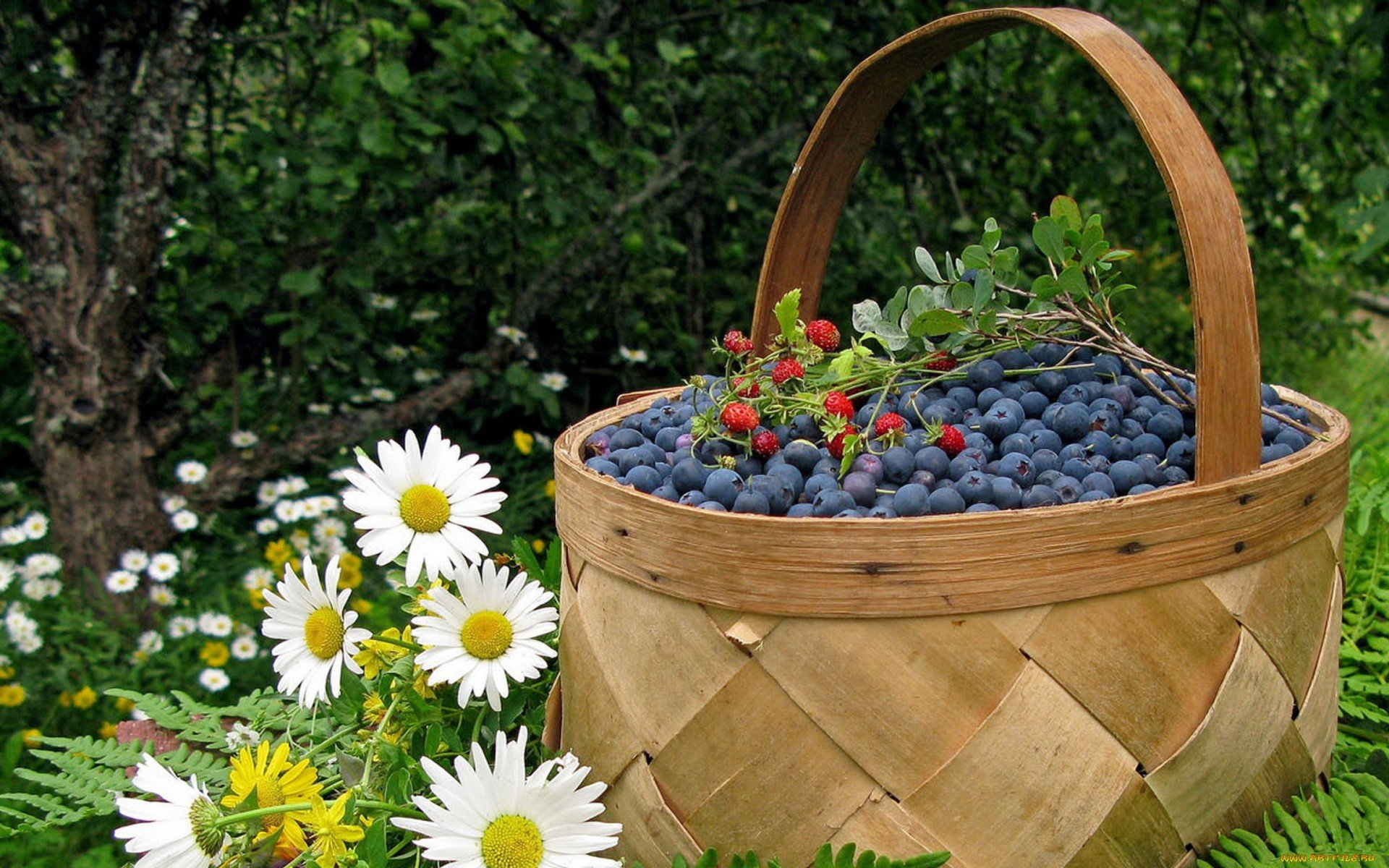 Download hd 1920x1200 Blueberry PC wallpaper ID:68988 for free
