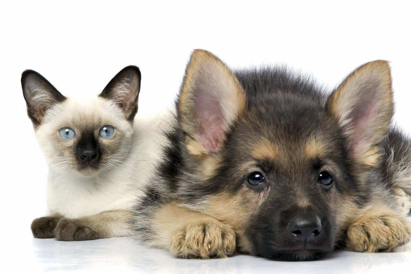 Best Cat and Dog wallpaper ID:125324 for High Resolution hd 1440x960 PC