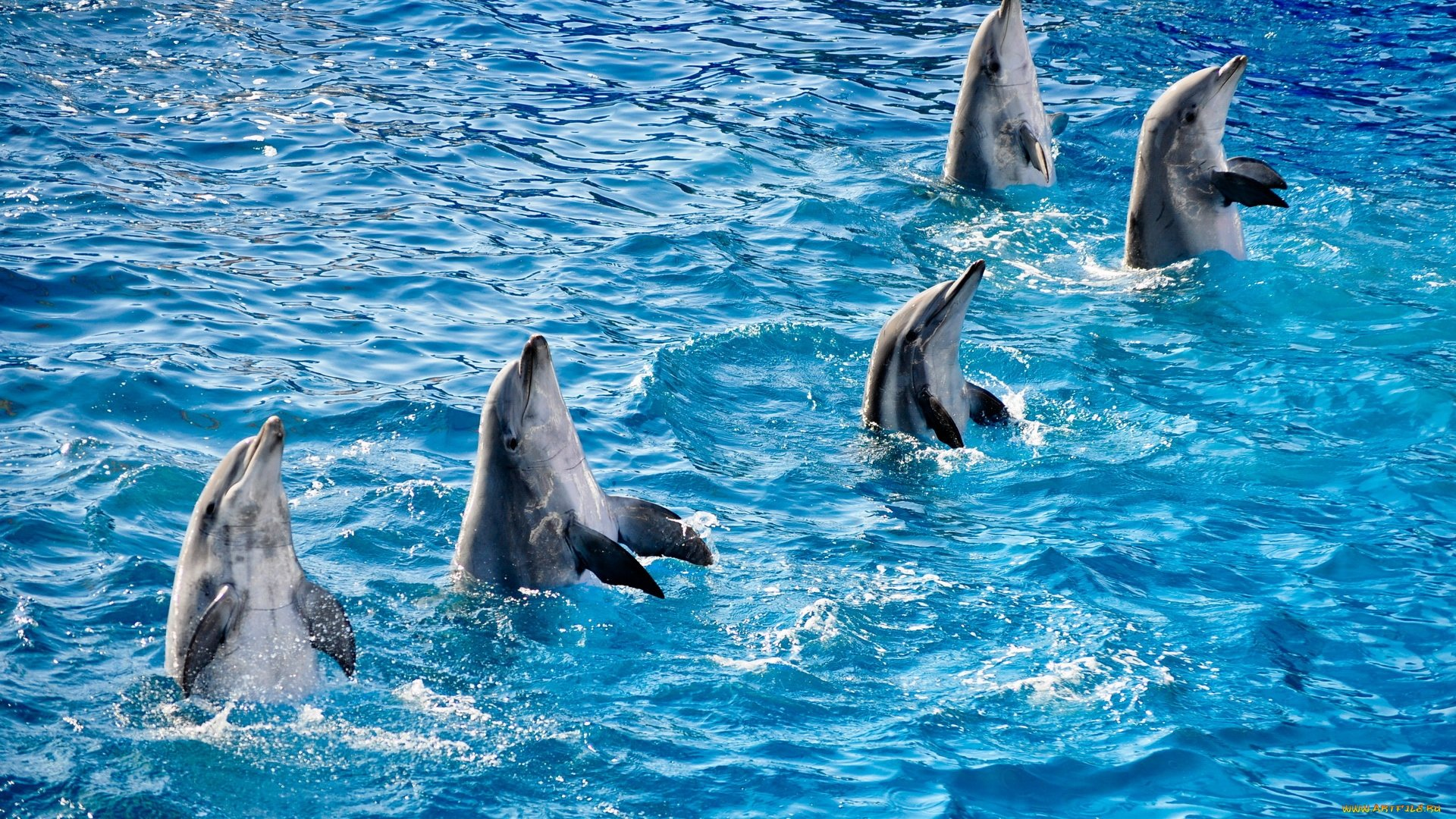 Best Dolphin wallpaper ID:248351 for High Resolution 1080p desktop
