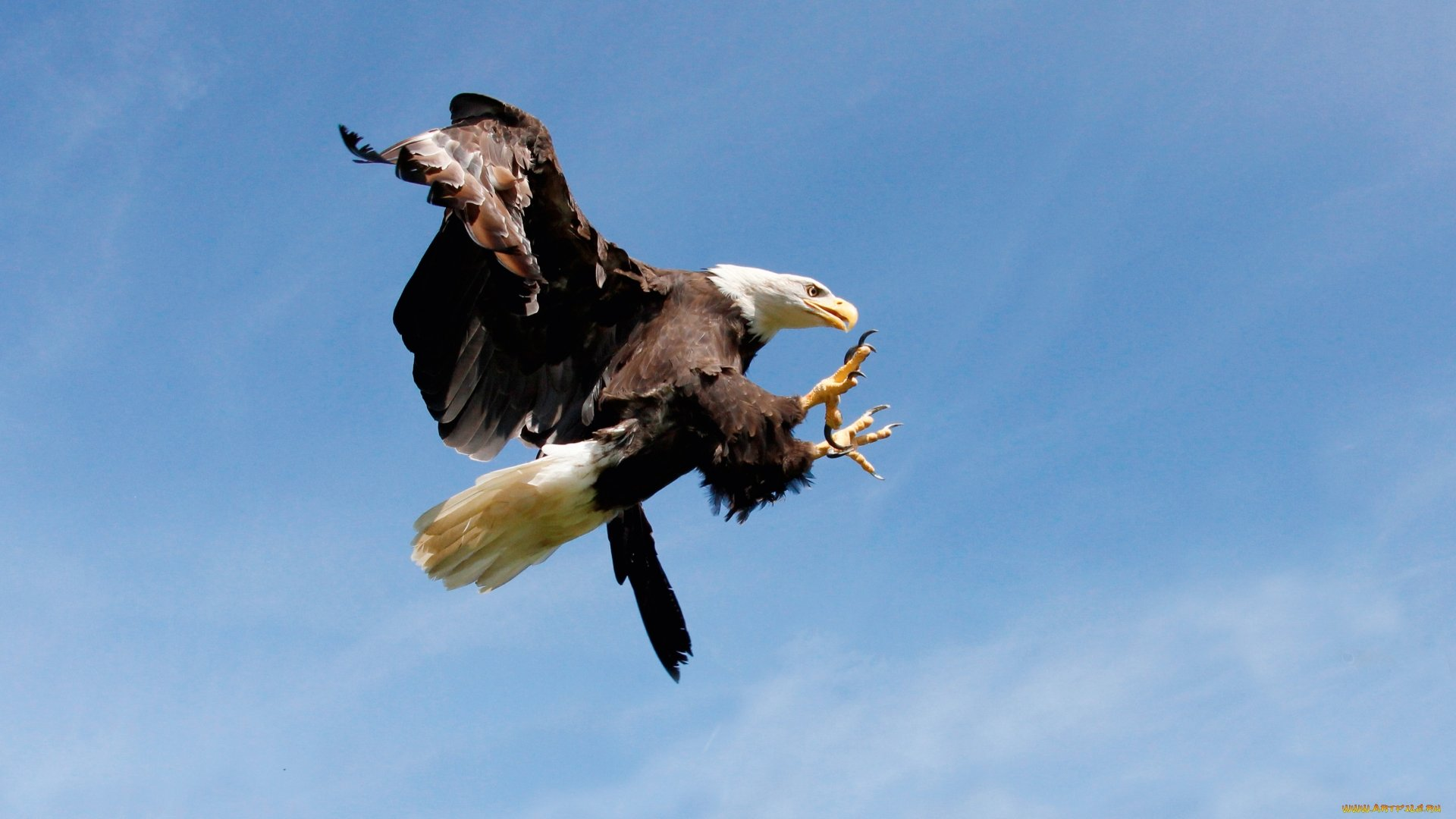 Awesome Eagle free wallpaper ID:231201 for hd 1080p desktop