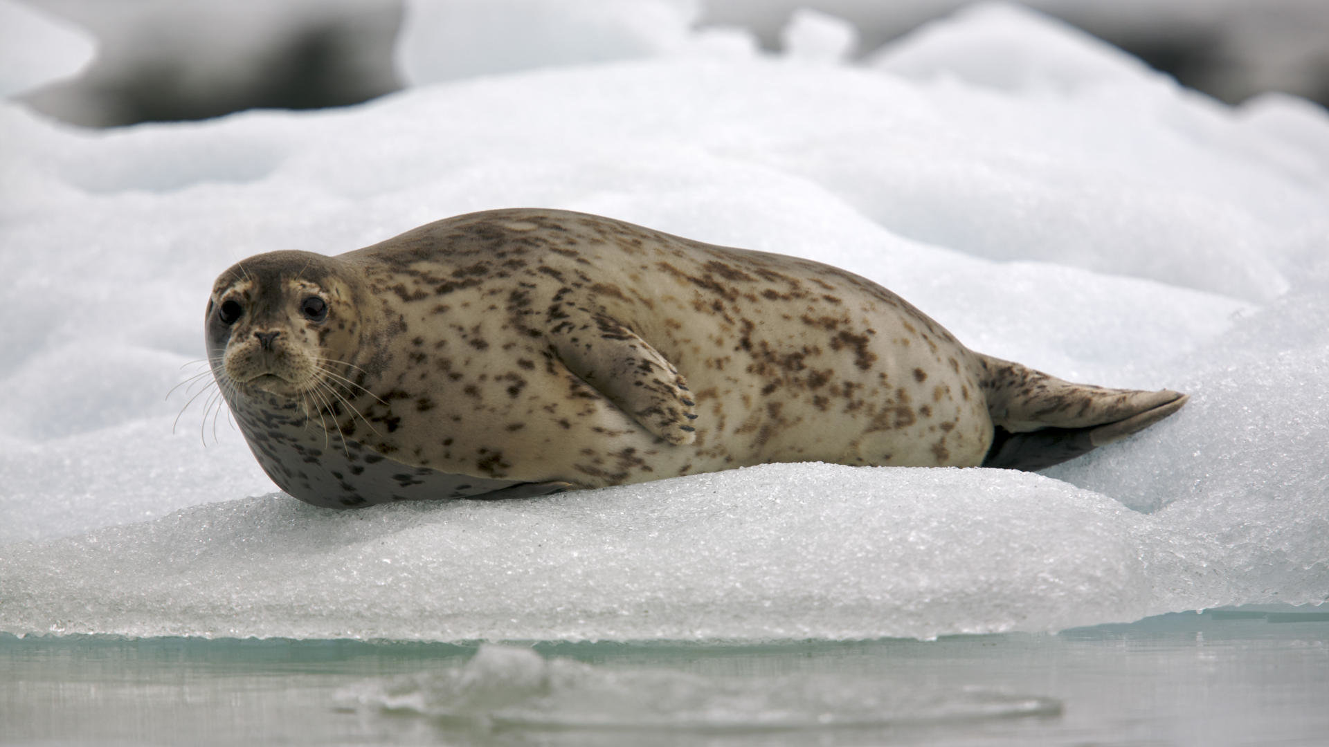 Free Seal high quality wallpaper ID:183347 for full hd 1920x1080 desktop