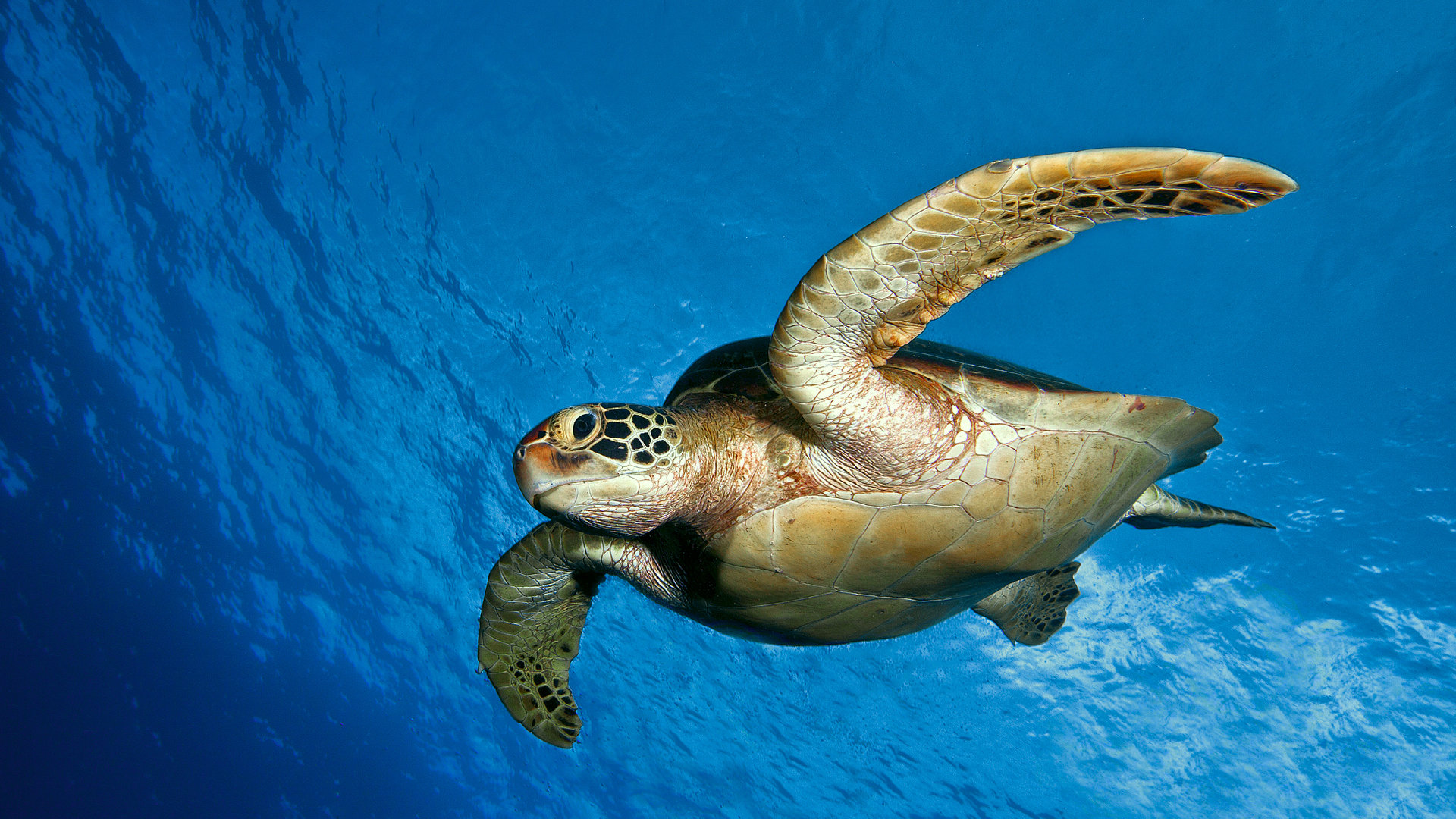 Free Turtle high quality background ID:29907 for full hd 1080p PC