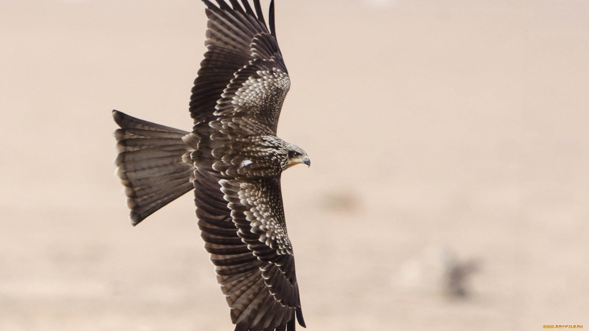 High resolution Falcon hd 1920x1080 wallpaper ID:408415 for PC