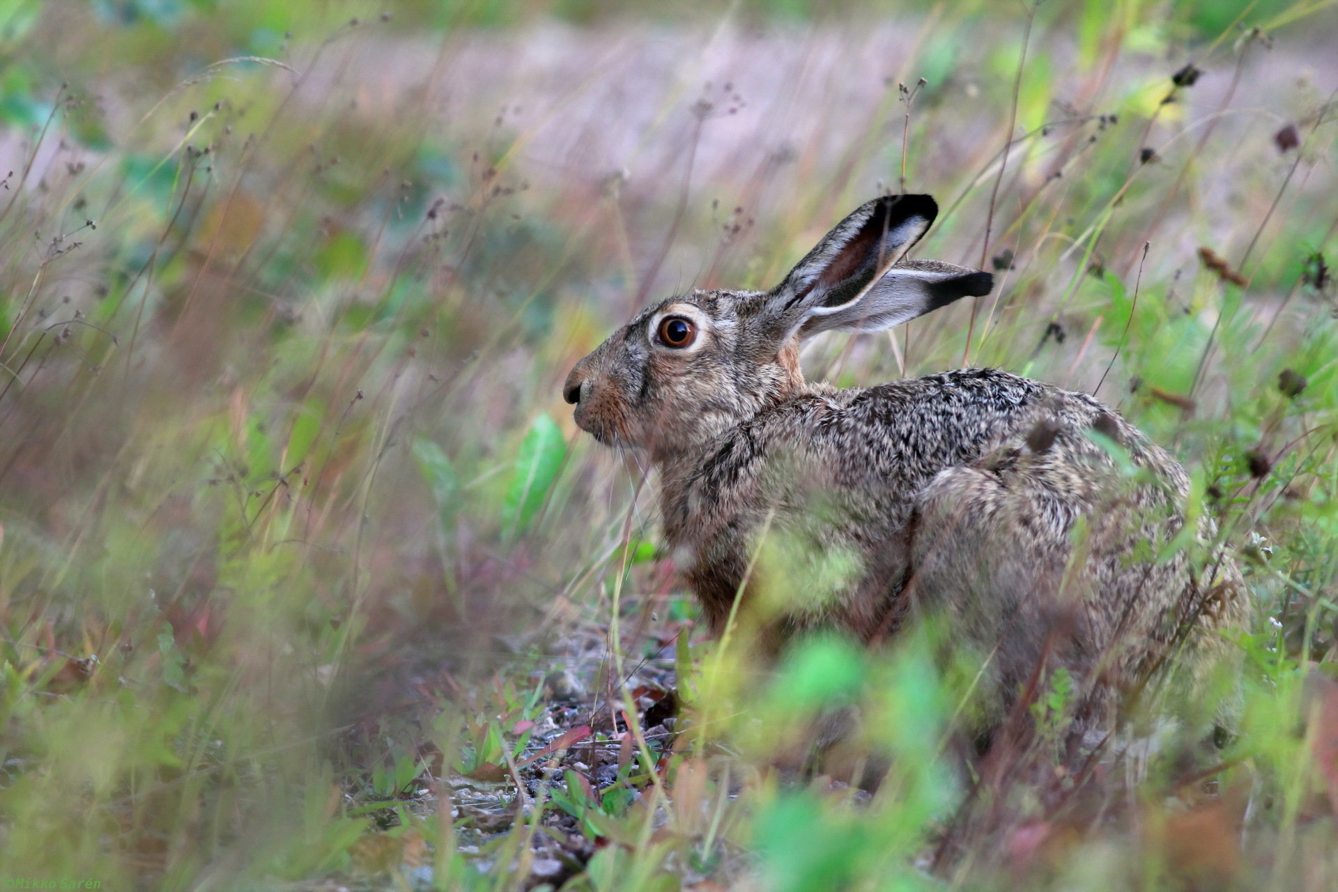 Download hd 1920x1280 Hare PC background ID:81089 for free
