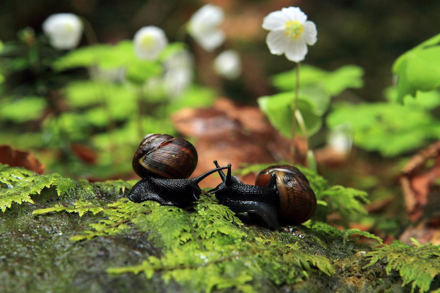 Download hd 1440x960 Snail PC background ID:198767 for free