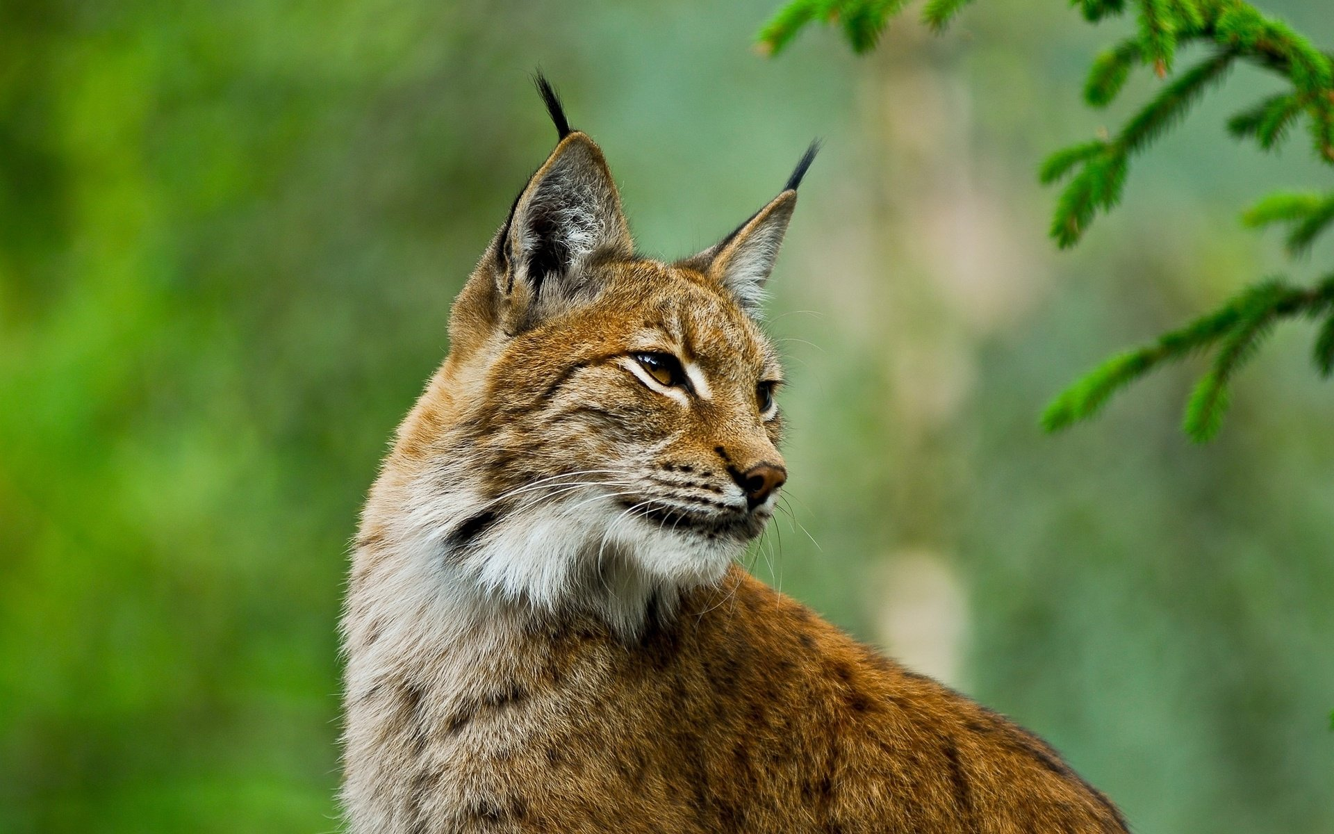 High resolution Lynx hd 1920x1200 wallpaper ID:105831 for computer