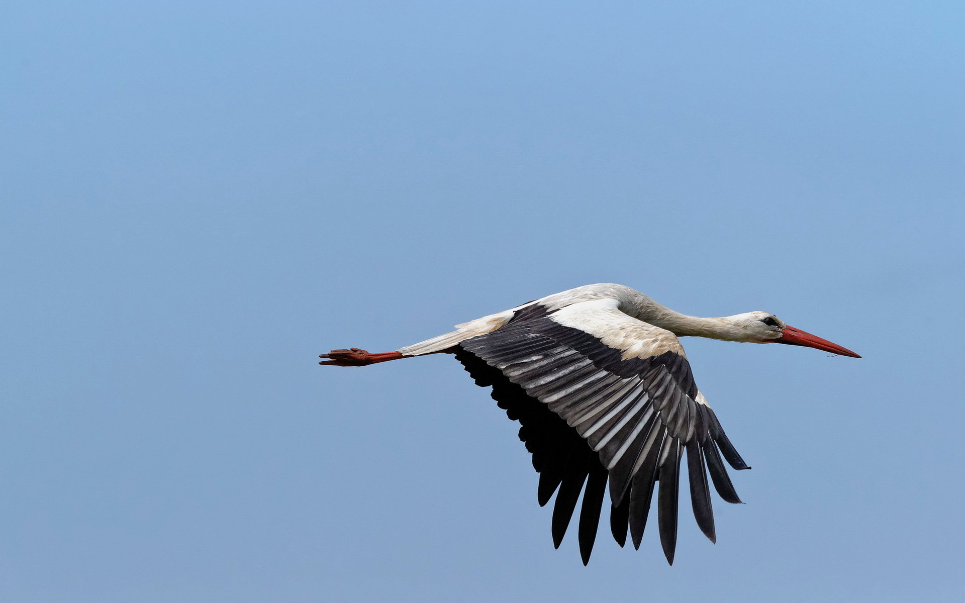 Best White Stork wallpaper ID:9562 for High Resolution hd 1920x1200 PC