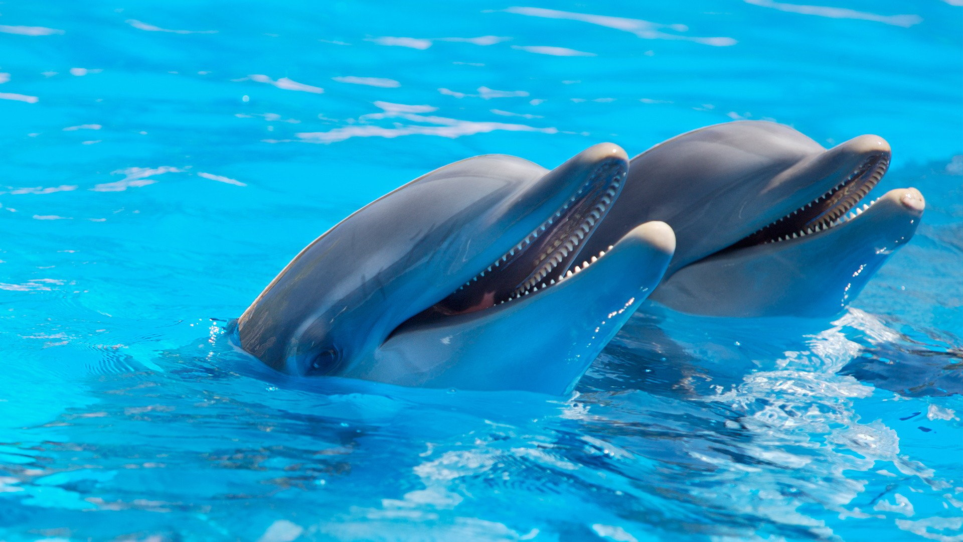 Free Dolphin high quality background ID:248308 for full hd 1080p desktop