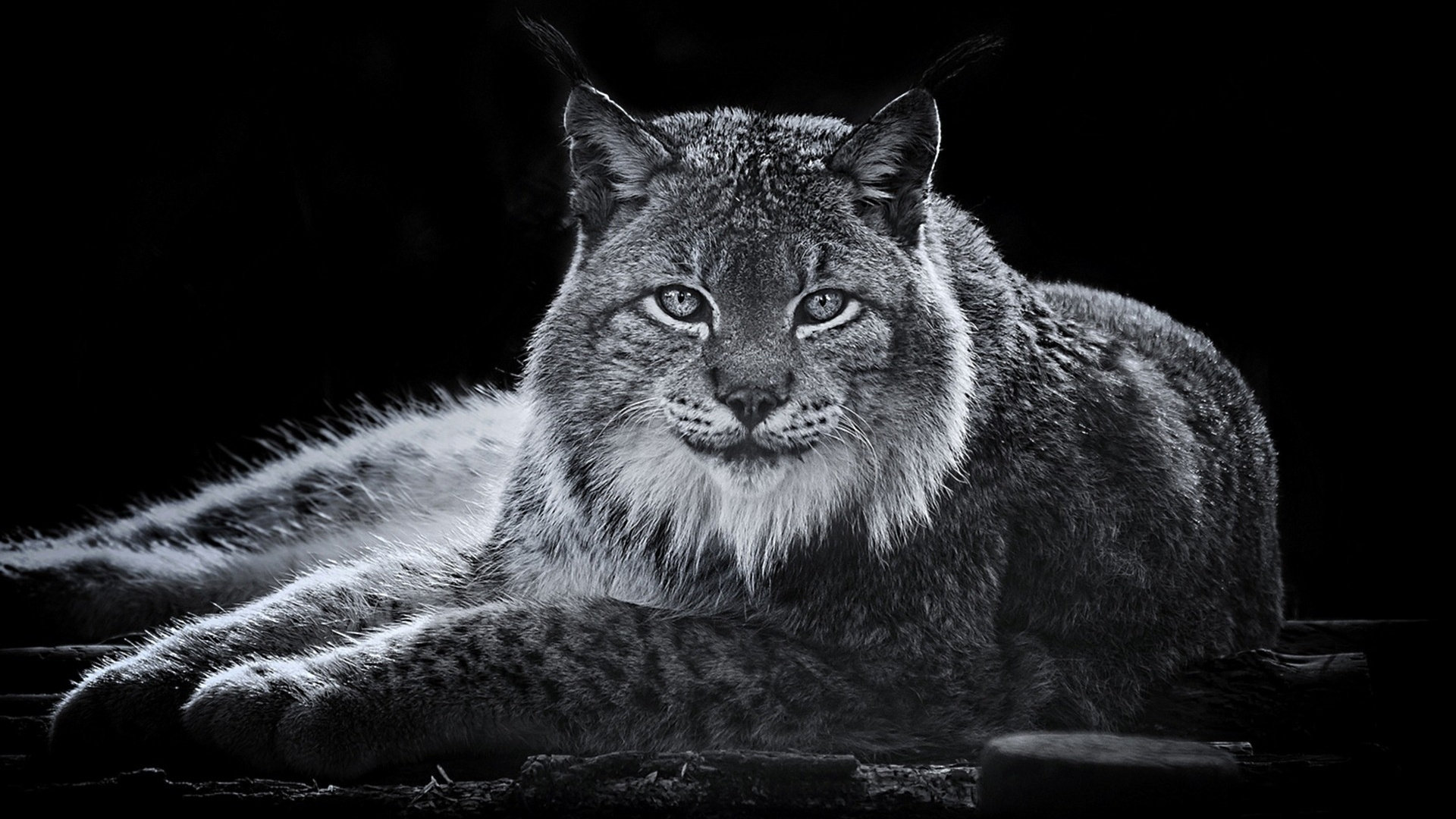 Awesome Lynx free wallpaper ID:105735 for hd 1920x1080 computer