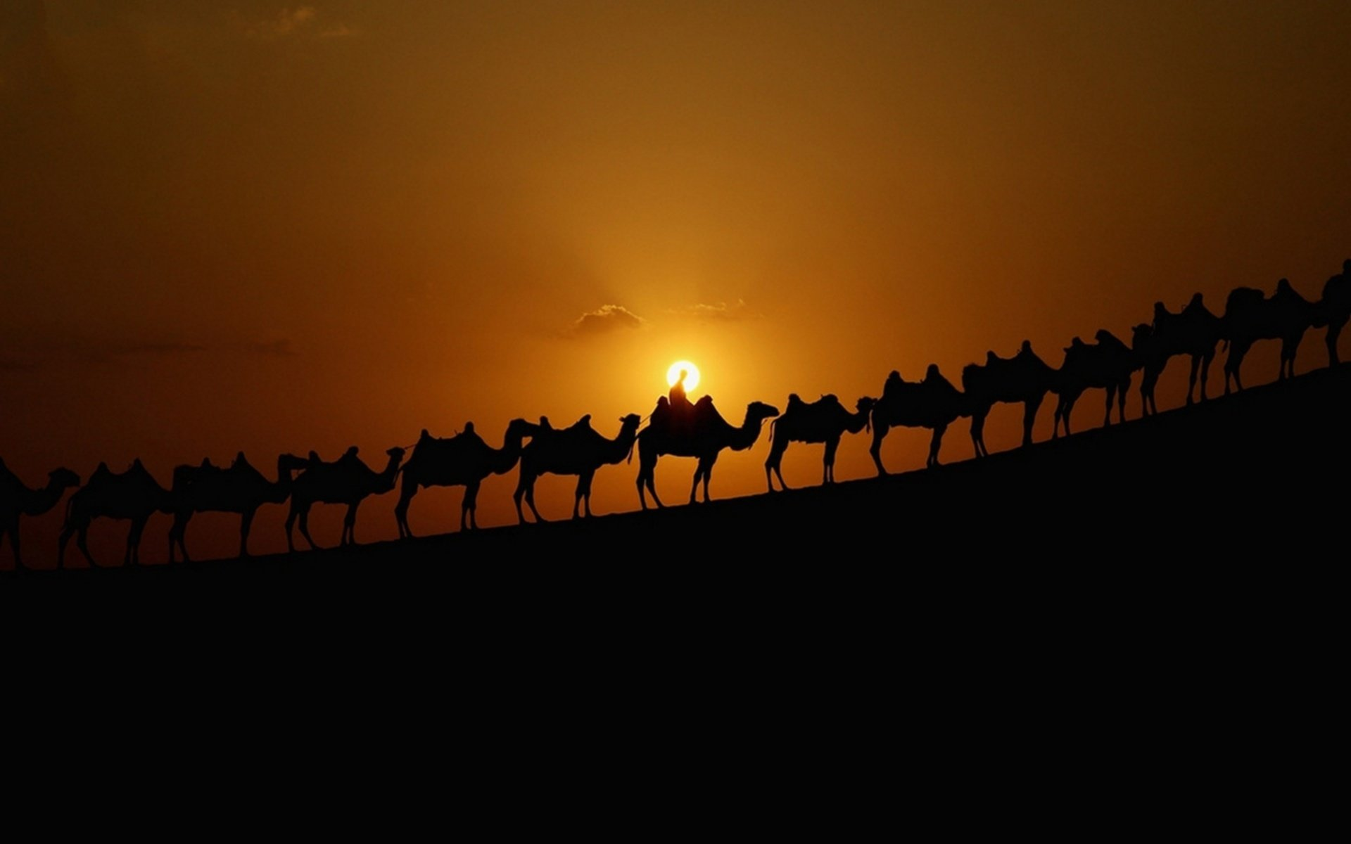 Awesome Camel free background ID:123449 for hd 1920x1200 PC