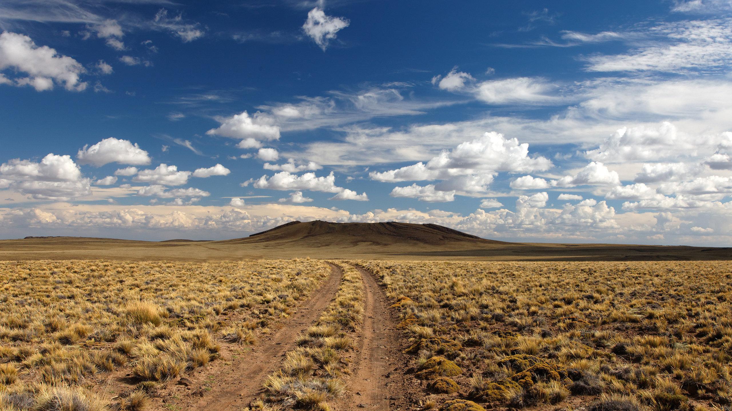 природа деревья поле пустыня  № 3805774  скачать