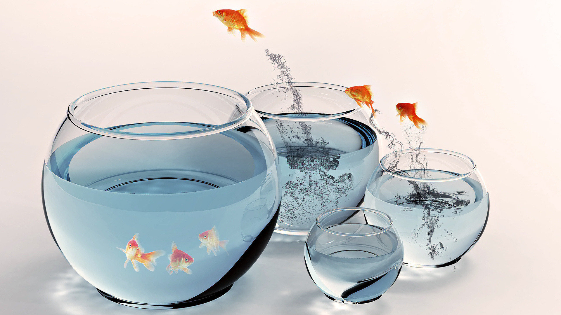 Free Goldfish high quality background ID:464109 for hd 1080p desktop