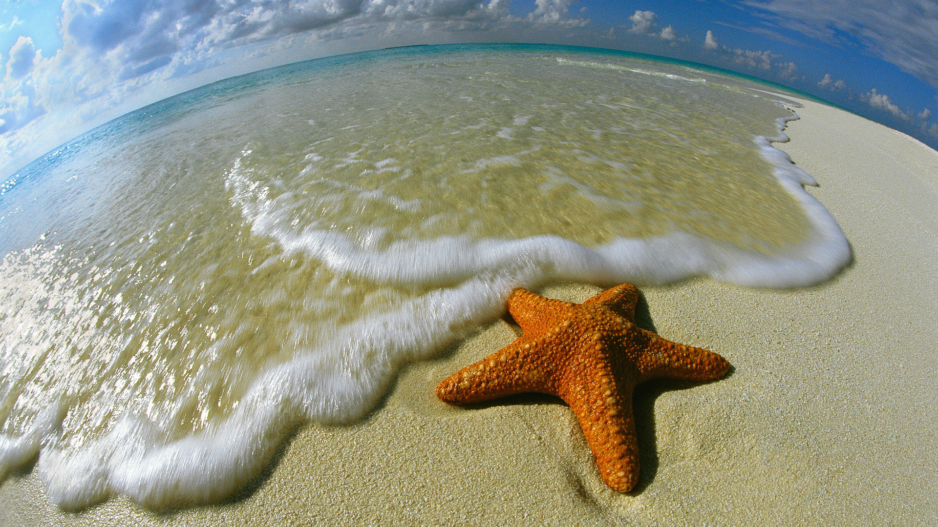Free download Starfish wallpaper ID:29689 full hd 1920x1080 for computer
