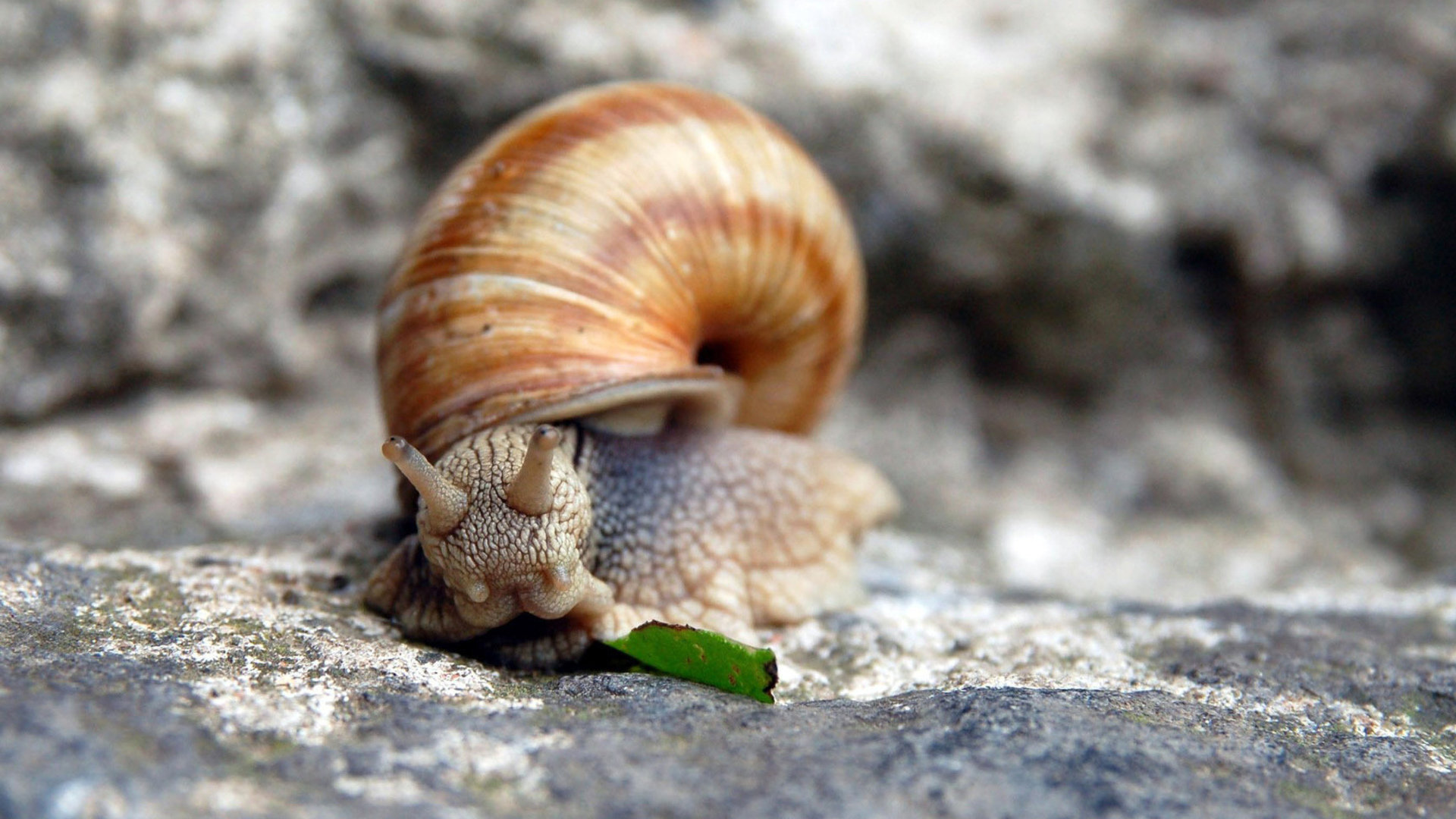 Free Snail high quality wallpaper ID:198824 for hd 1920x1080 computer