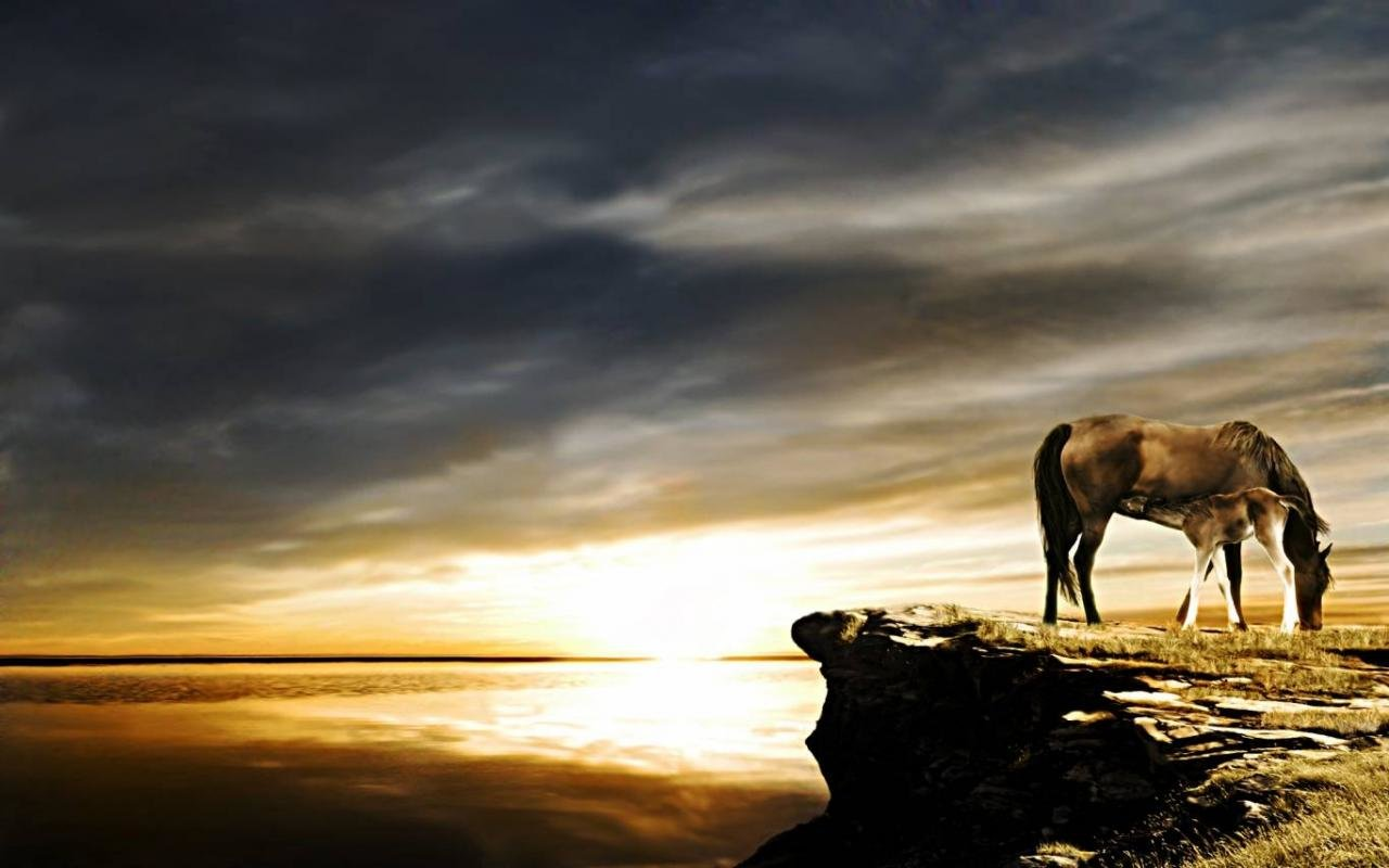 Awesome Horse free wallpaper ID:23902 for hd 1280x800 PC