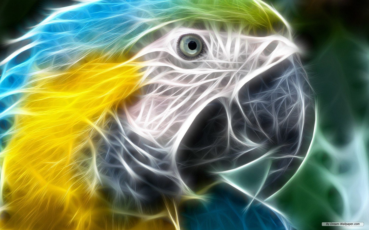 Free Macaw high quality wallpaper ID:46491 for hd 1440x900 computer