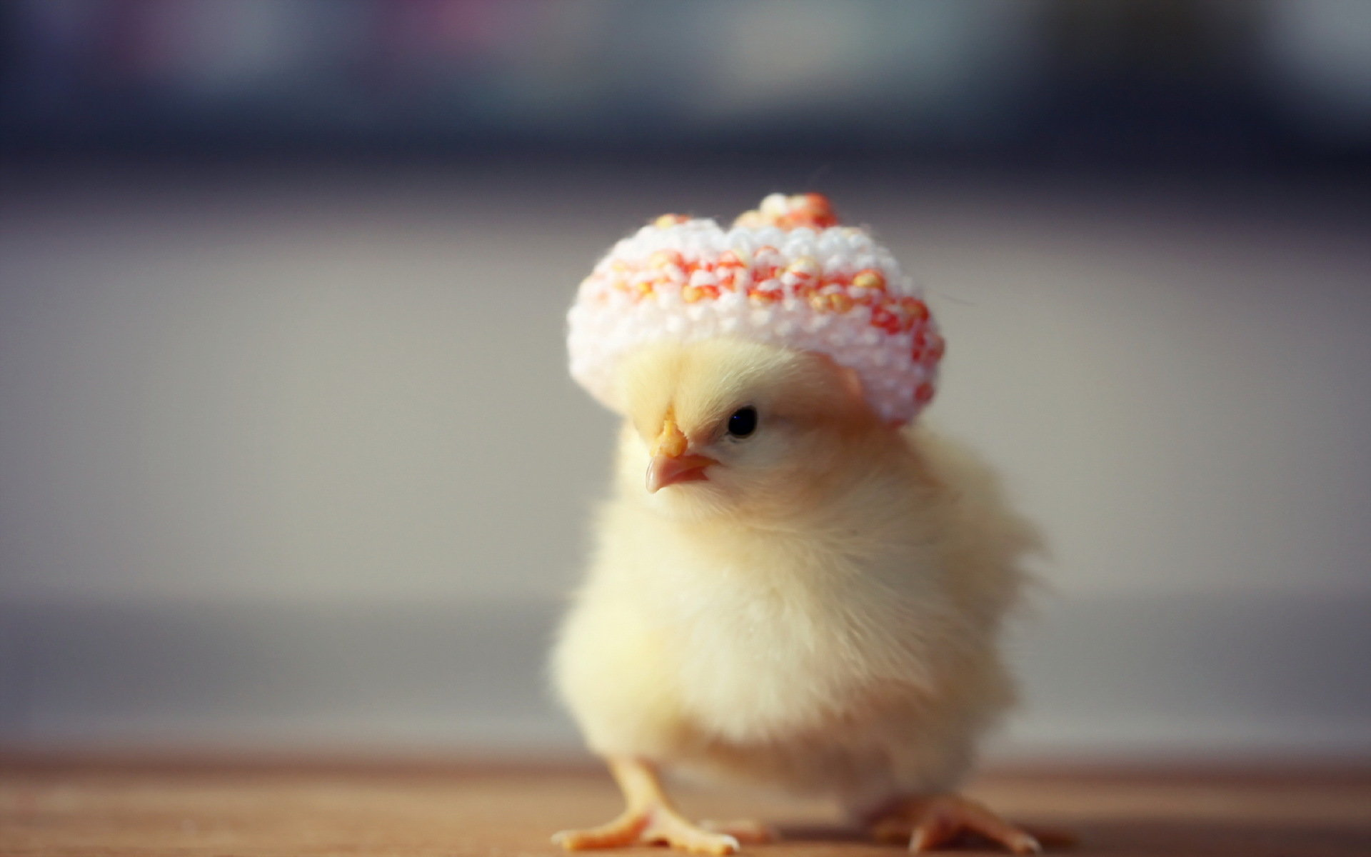 High Resolution Chicken Hd 1920x1200 Wallpaper Id240233 For Pc