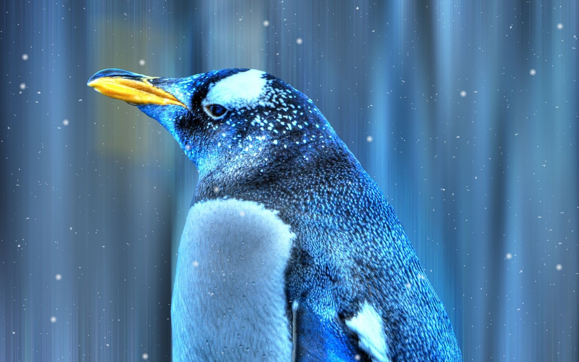 Free download Emperor Penguin wallpaper ID:47915 hd 1920x1200 for computer
