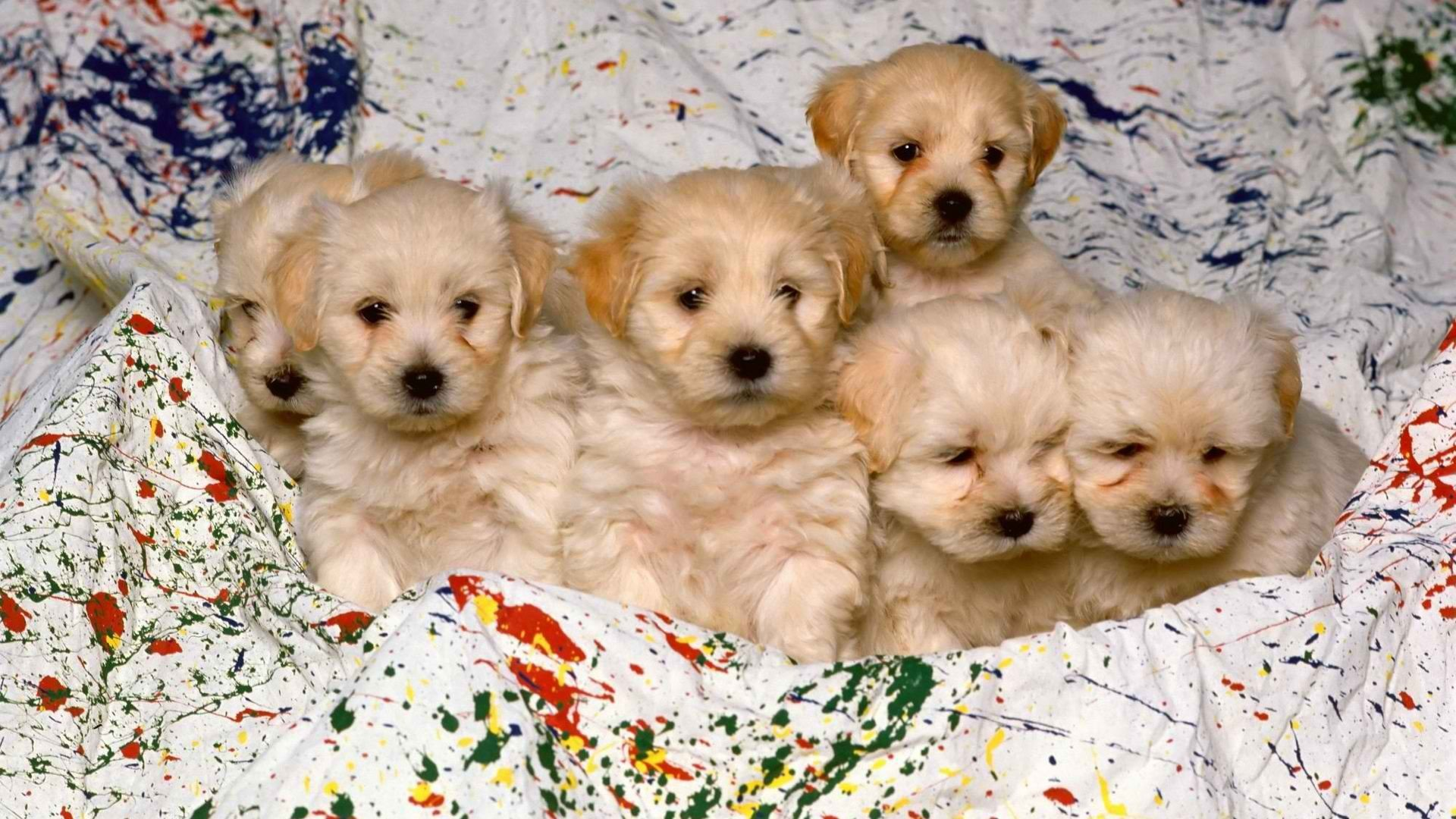 Download 1080p Puppy PC wallpaper ID:46697 for free