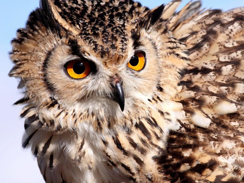 Free Owl high quality wallpaper ID:237245 for hd 1024x768 desktop