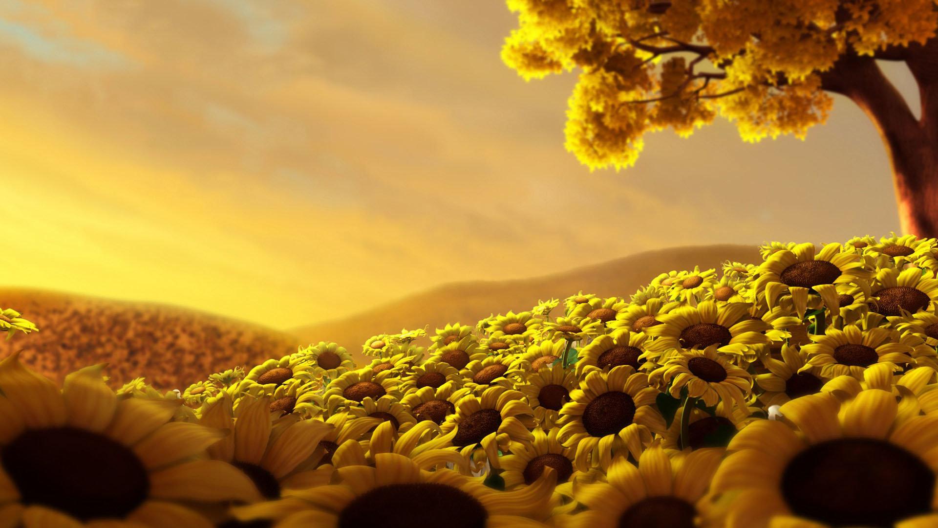 sunflower background full hd 1080p 226264