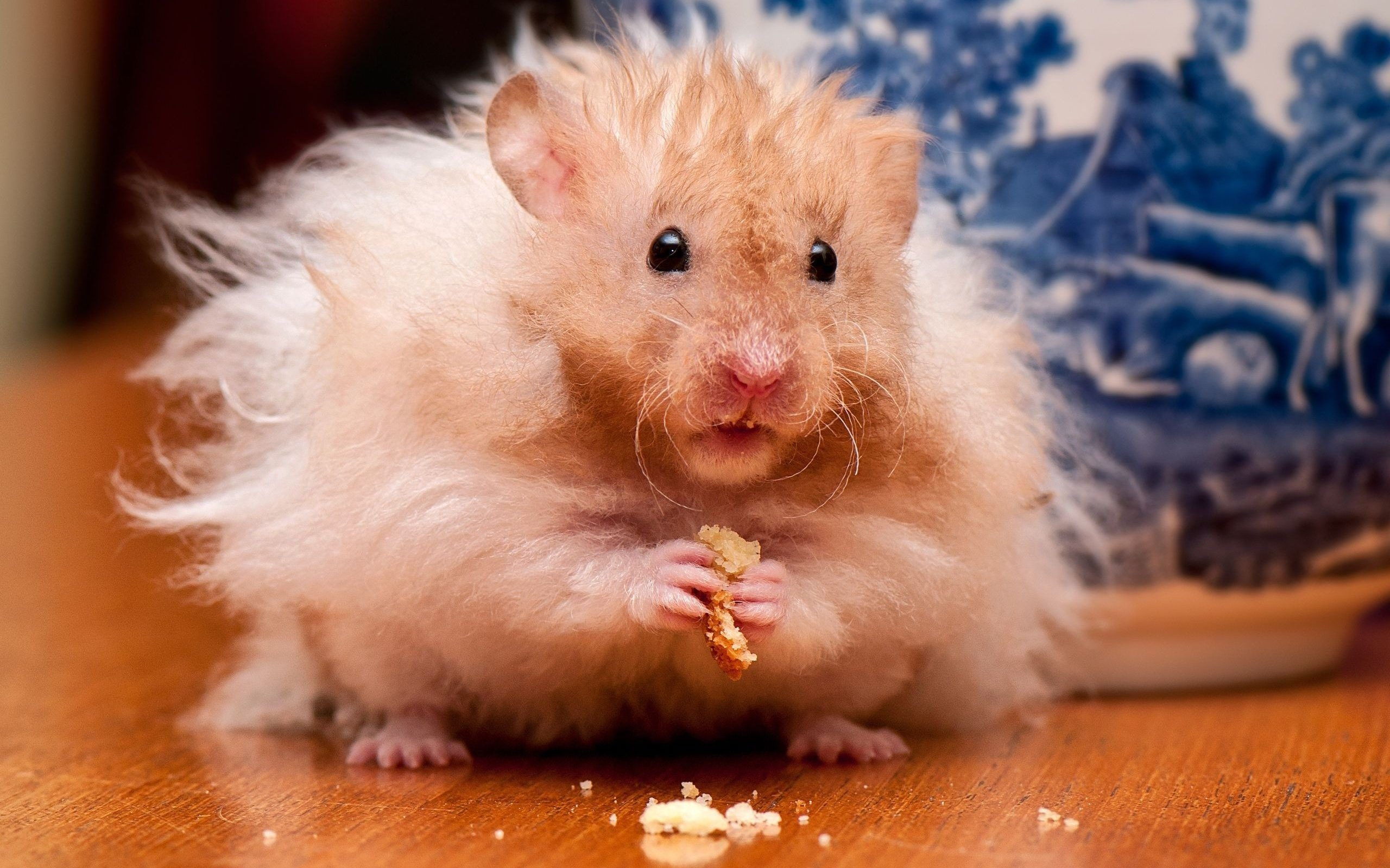 Free download Hamster wallpaper ID:234044 hd 2560x1600 for computer