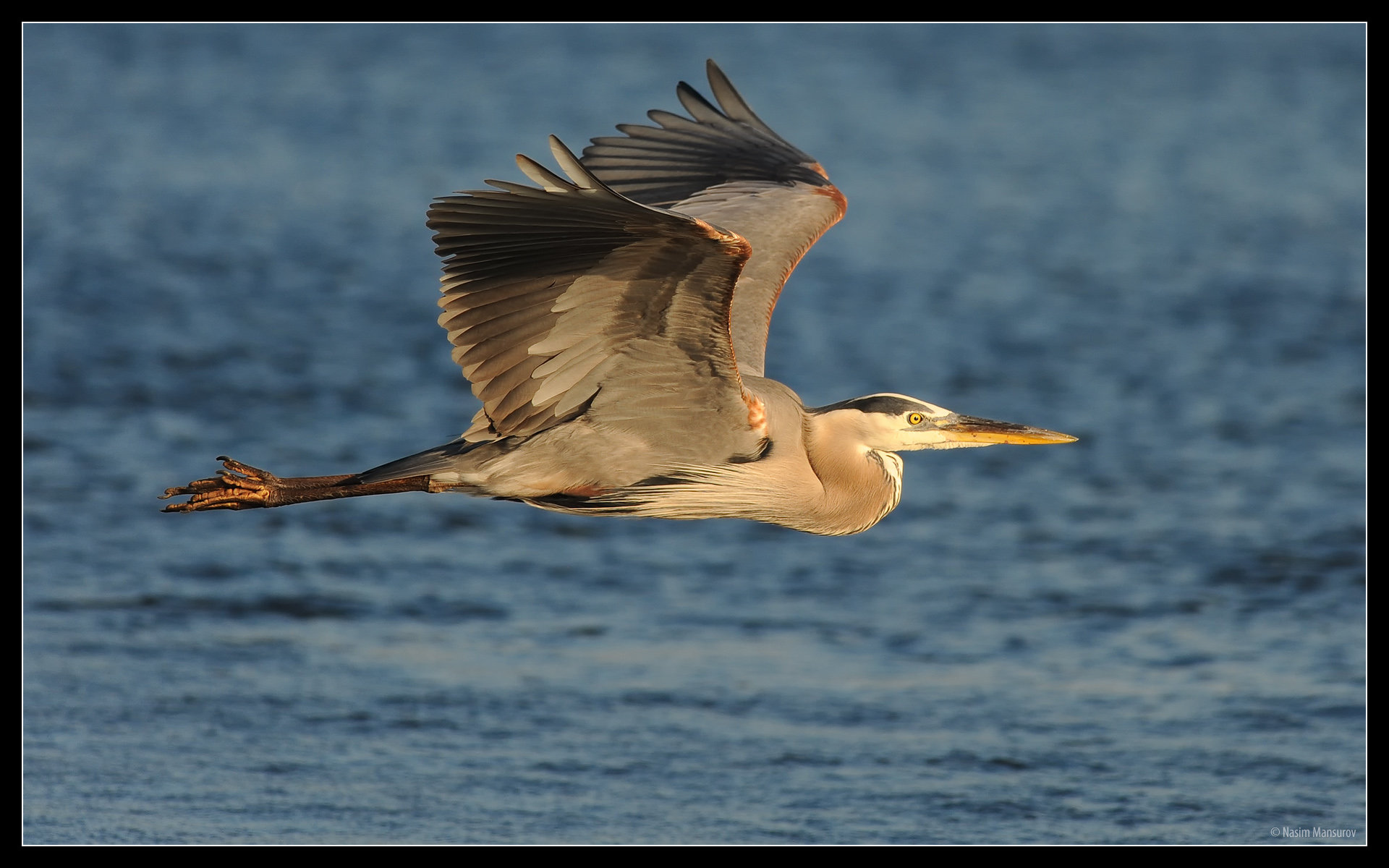 Download hd 1920x1200 Heron PC background ID:253379 for free